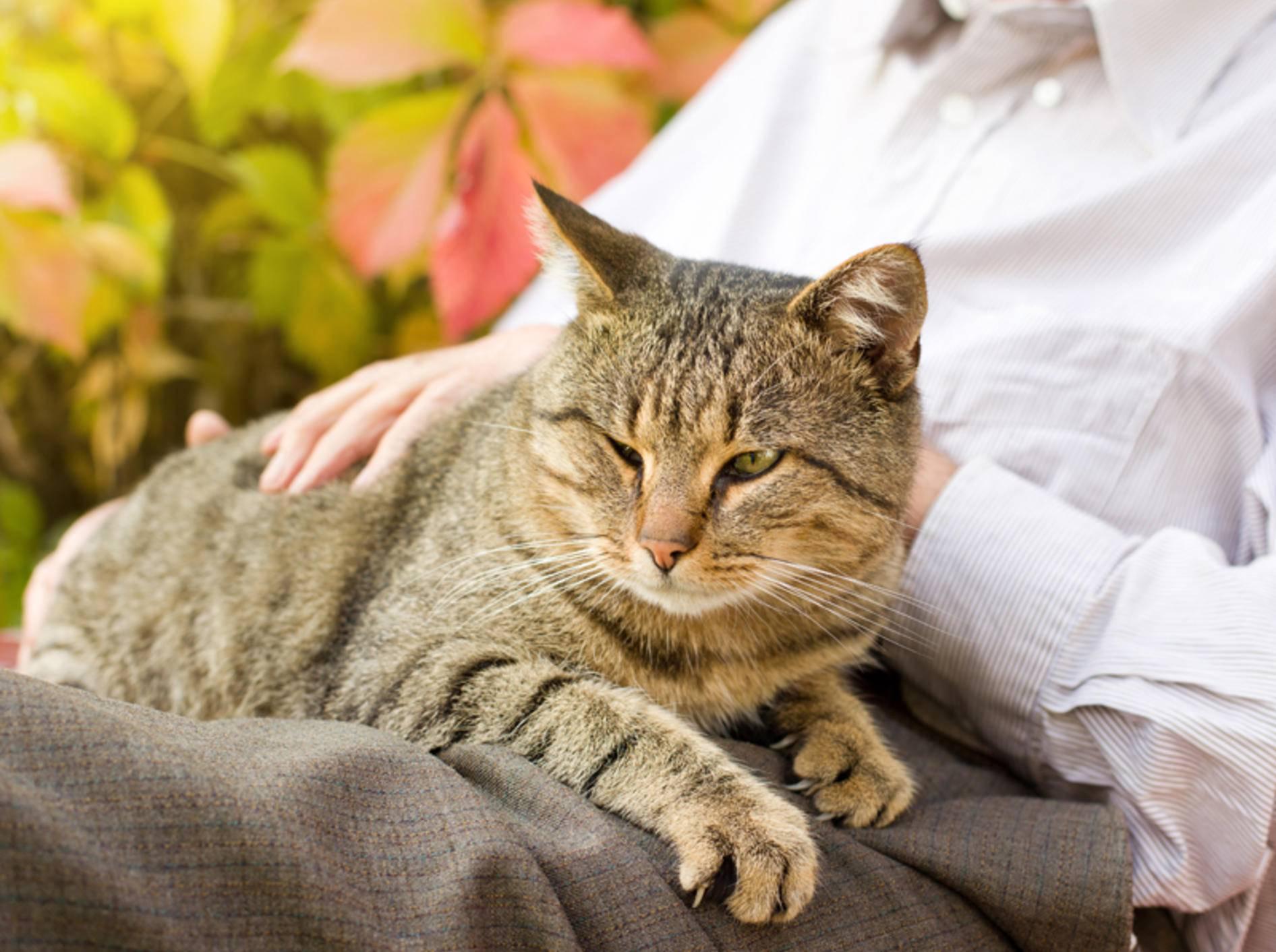 Alte Katzen brauchen besonders liebevolle Fürsorge – Bild: Shutterstock / Budimir Jevtic