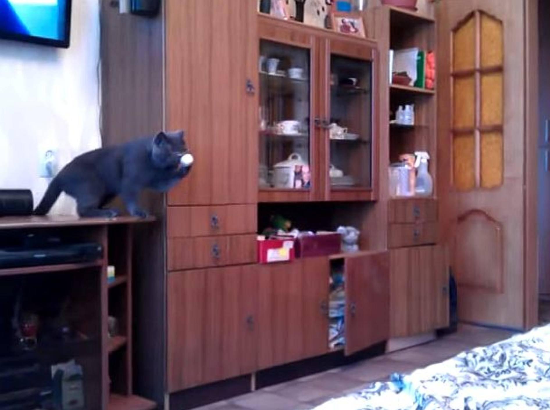 Süße graue Katze ist Ping-Pong-Profi – Bild: Youtube / RM Videos