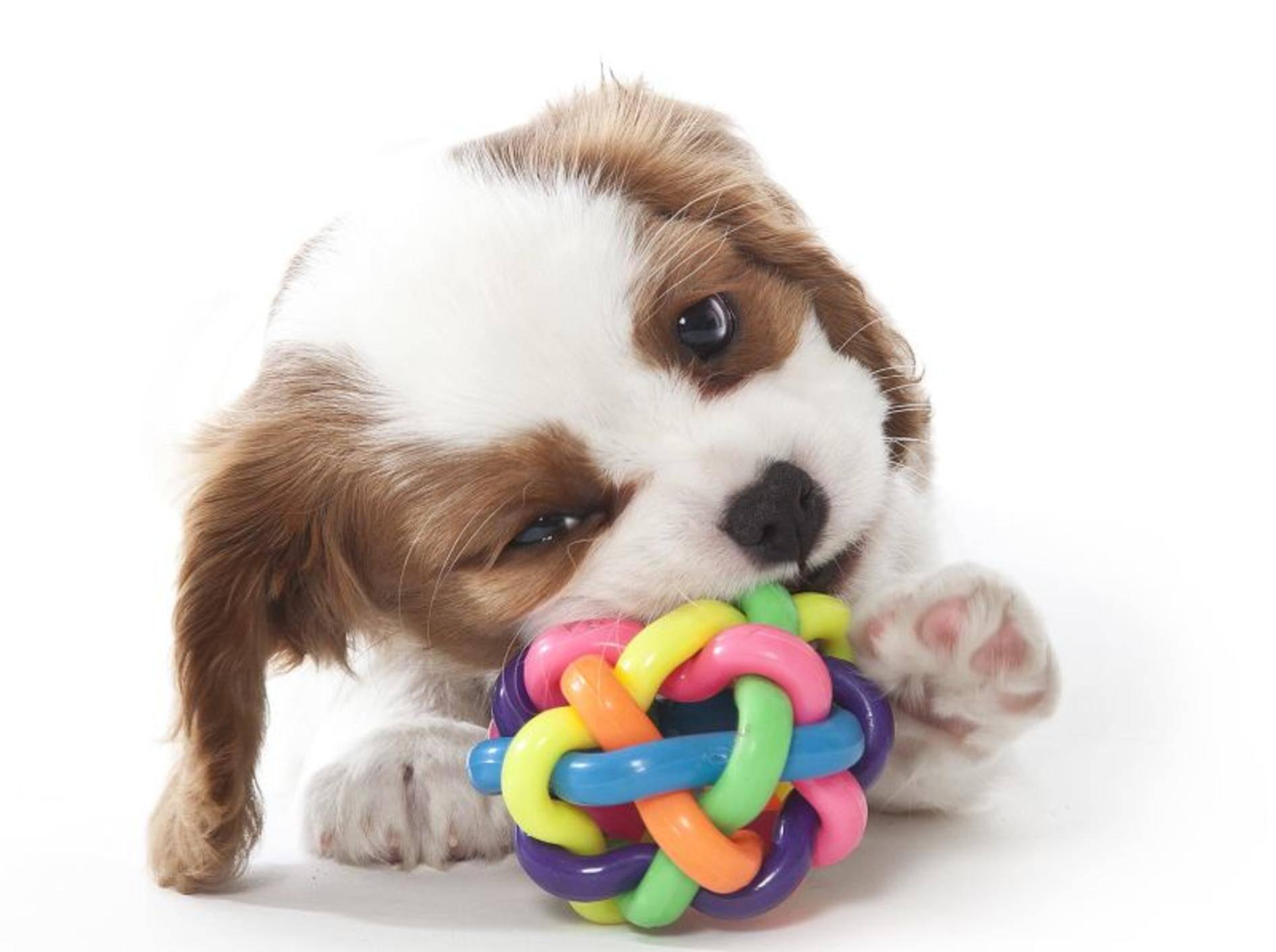 Quietschendes Hundespielzeug macht Spaß! – Bild: Shutterstock / Maja H.