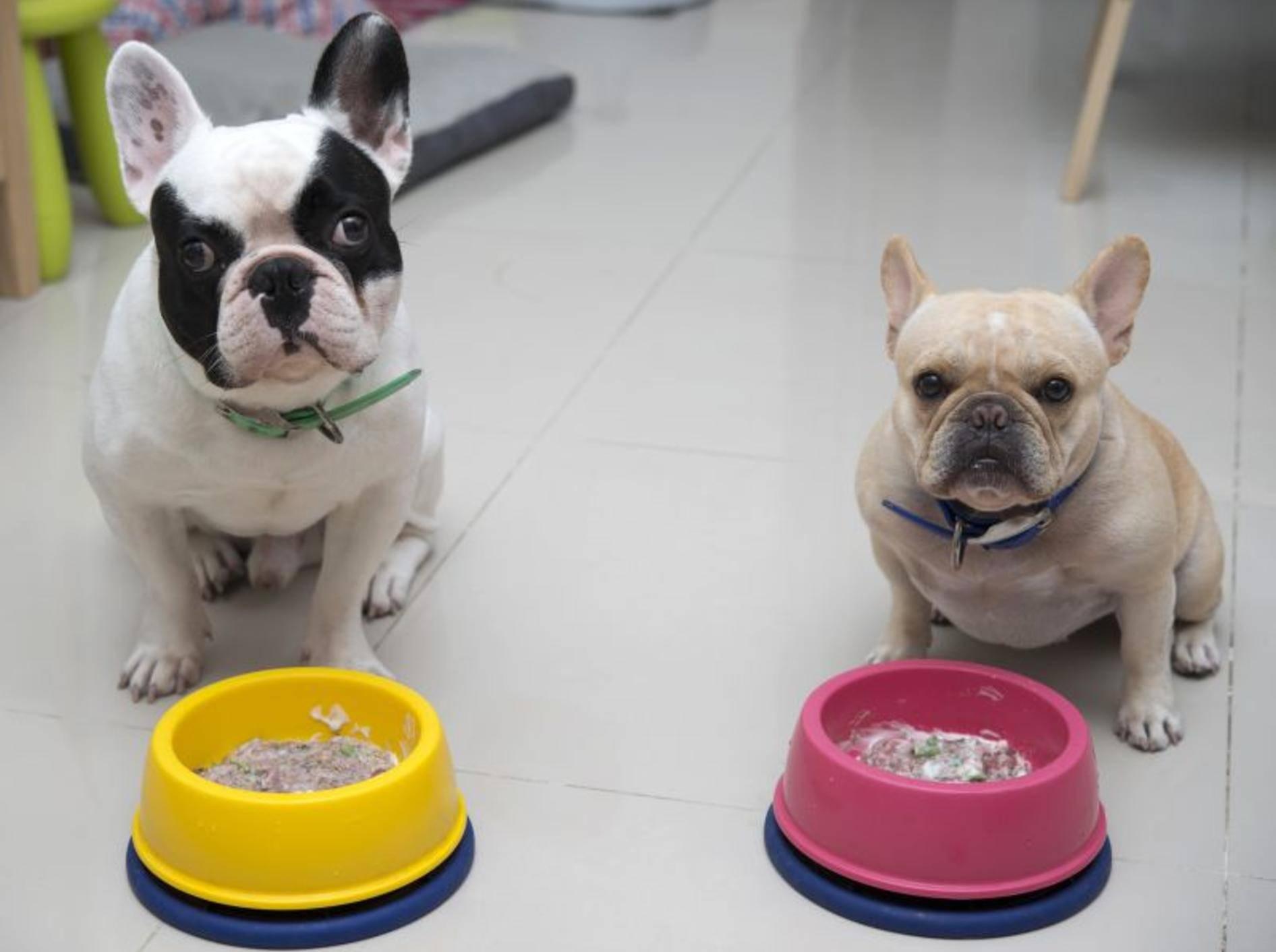 Diätfutter oder reduzierte Futtermenge hilft bei Übergewicht – Bild: Shutterstock / Kittibowornphatnon
