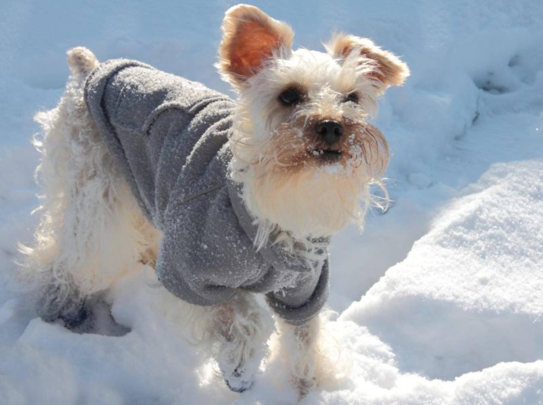 Hundeschuhe für den Pfotenschutz – Bild: Shutterstock / Joyce Marrero