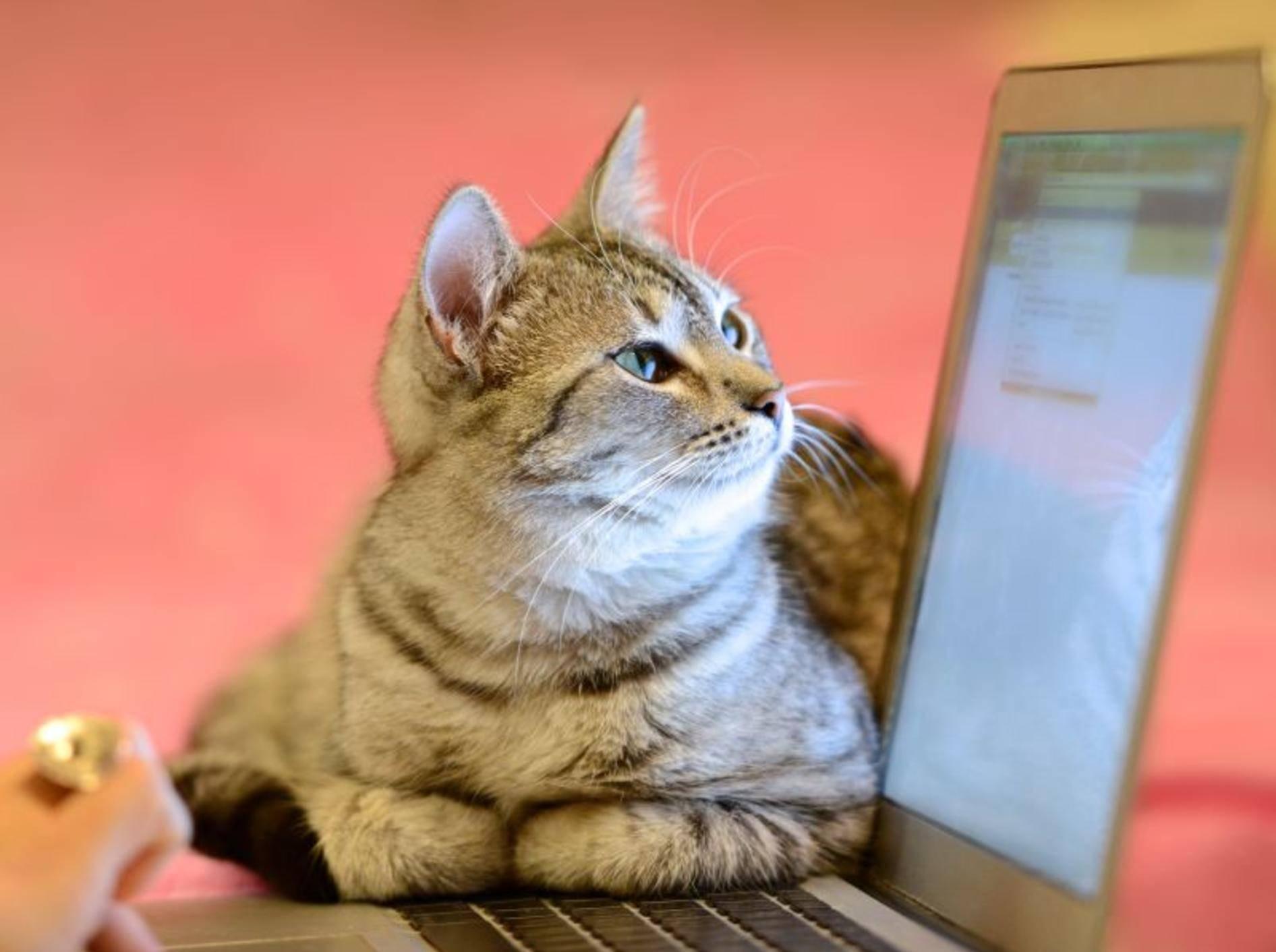 Simon's Cat Artikel für Katzen – Bild: Shutterstock / Renata Apanaviciene