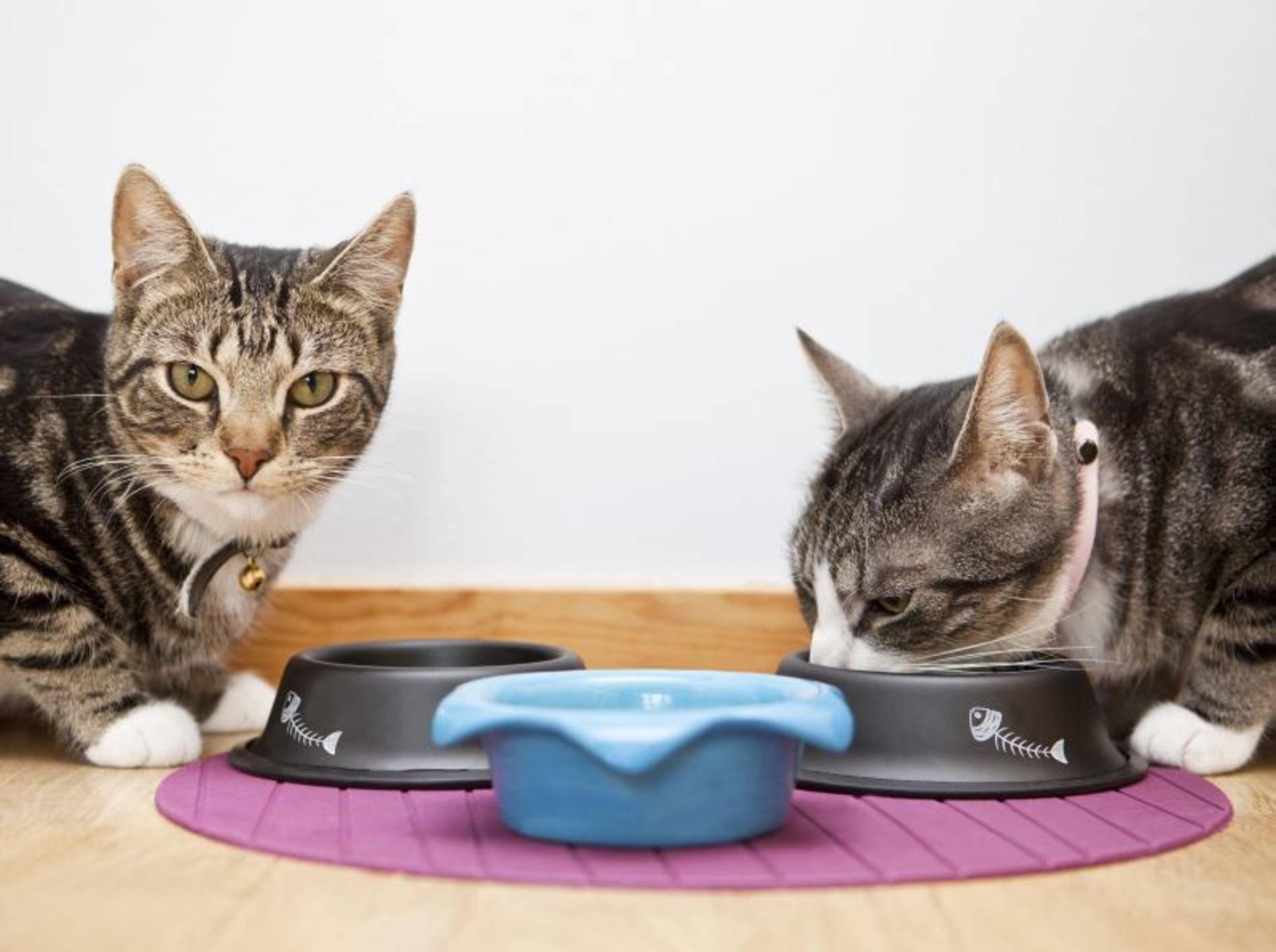 Produkte mit Taurin für Katzen – Bild: Shutterstock / Gemenacom