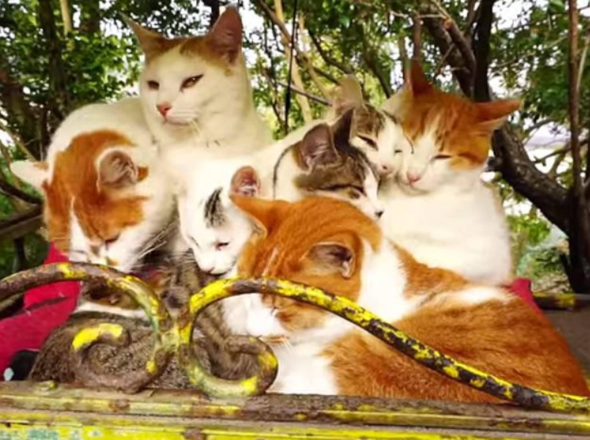 Gruppenkuscheln bei ein paar süßen Katzenkumpels – Bild: Youtube / Nyanta8355