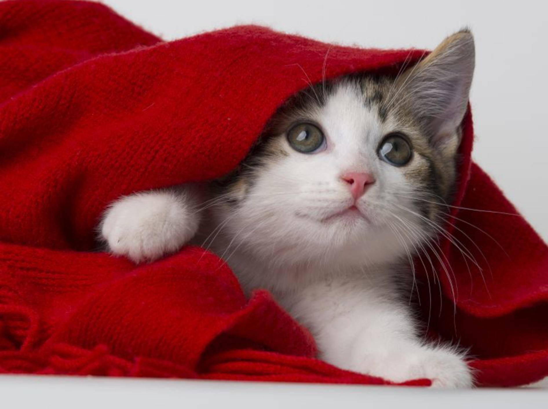 Der erste Tag im neuen Zuhause ist aufregend für ein Katzenbaby – Bild: Shutterstock / Kuttelvaserova Stuchelova
