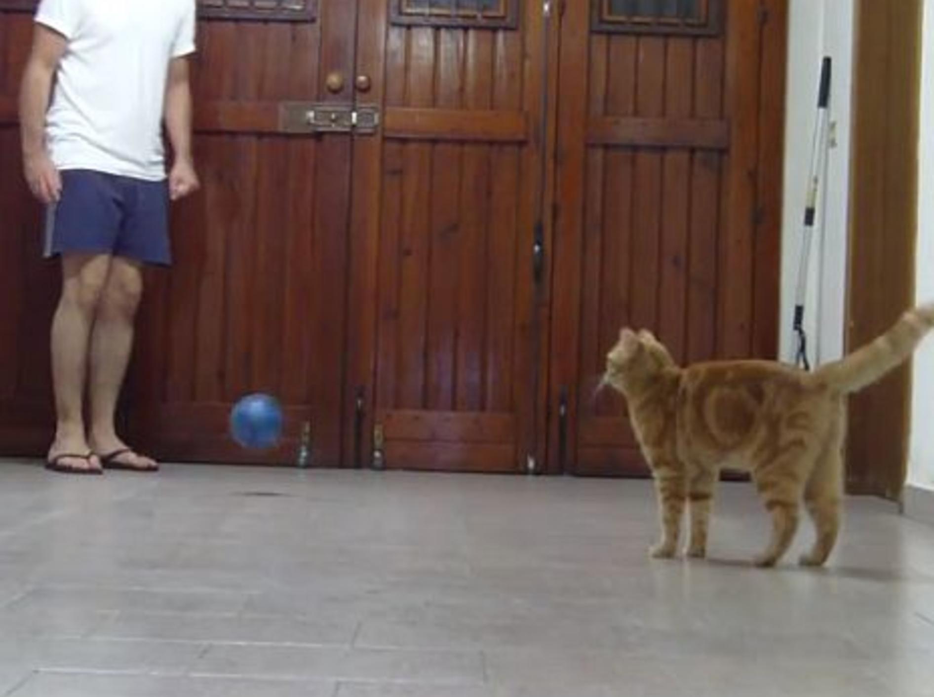 Kätzchen Sissi spielt Fußball – Bild: Youtube / Sissi The Red Cat