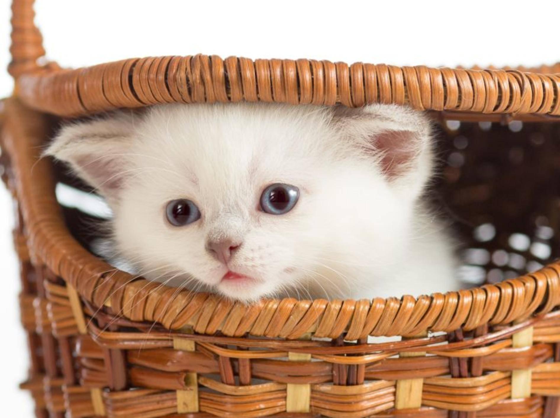 """""""Hi Leute!"""" Hi kleines weißes Katzenbaby! – Bild: Shutterstock / Andrey Kuzmin"""