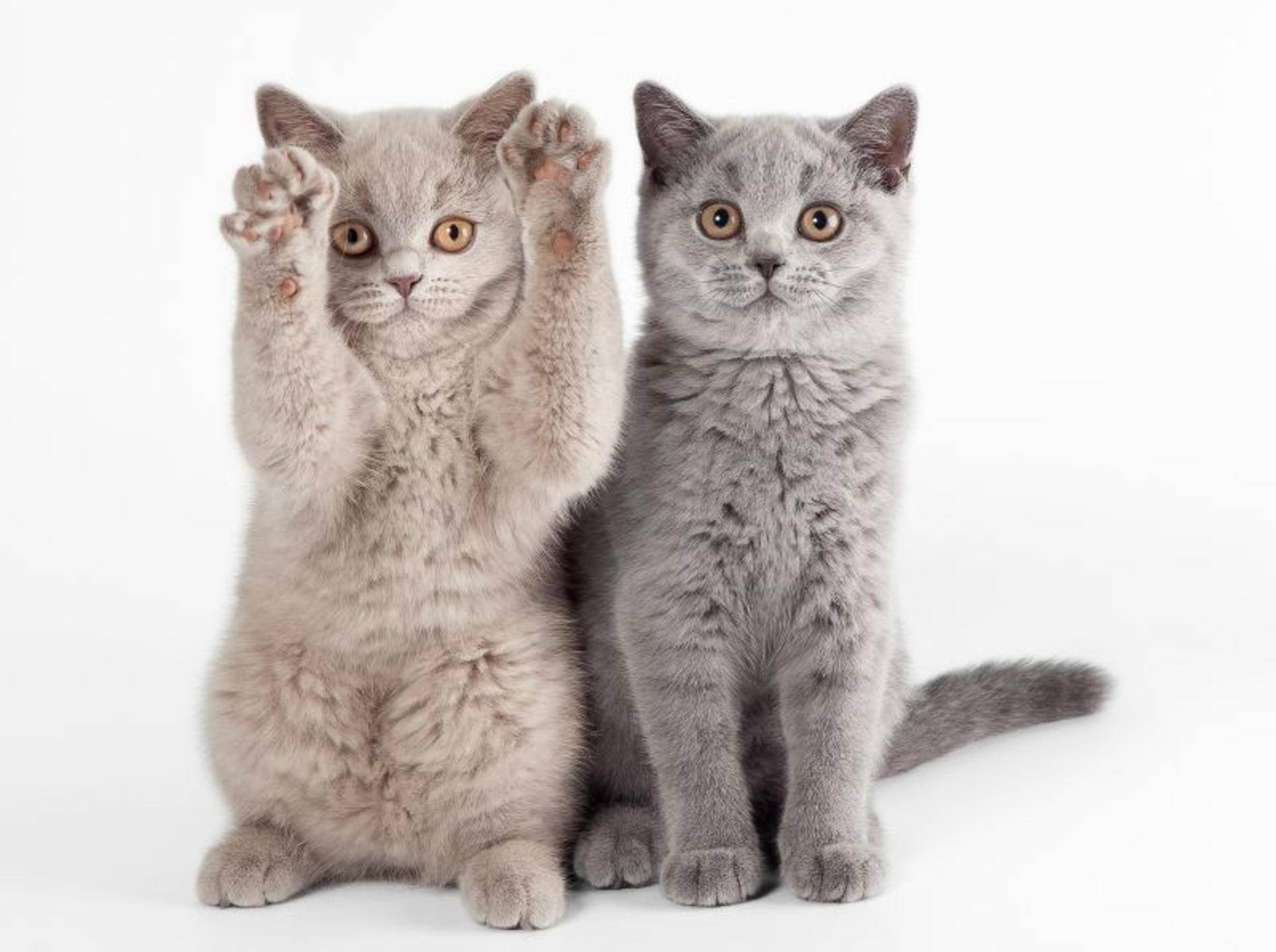 Clickern mit zwei Katzen: Gute Organisation ist alles – Bild: Shutterstock / dien