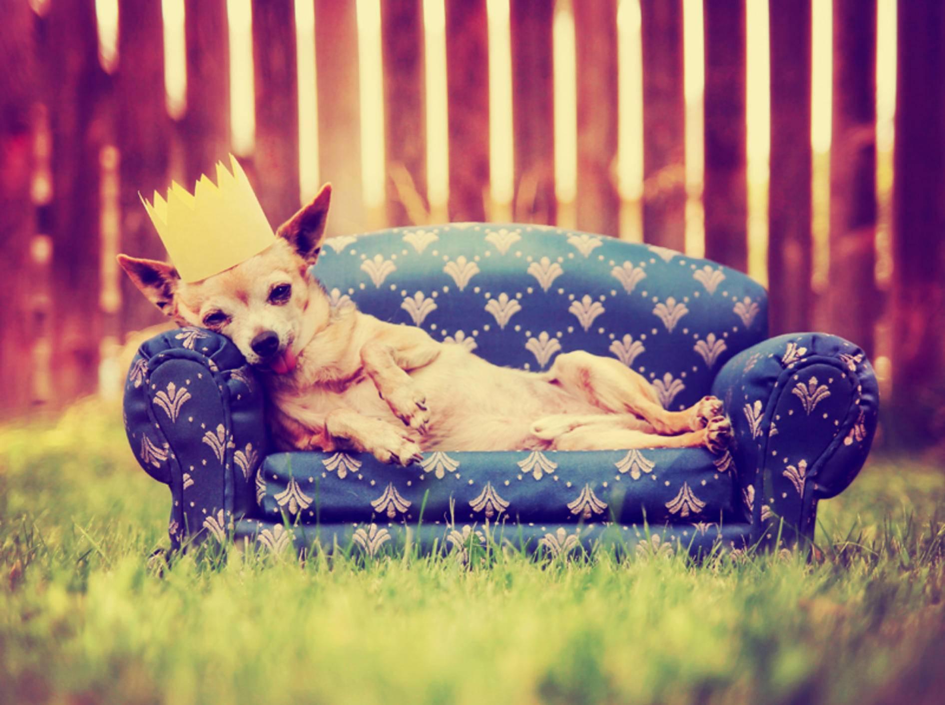 Falsches Belohnen ist ein häufiger Fehler in der Hundeerziehung – Bild: Shutterstock / Annette Shaff