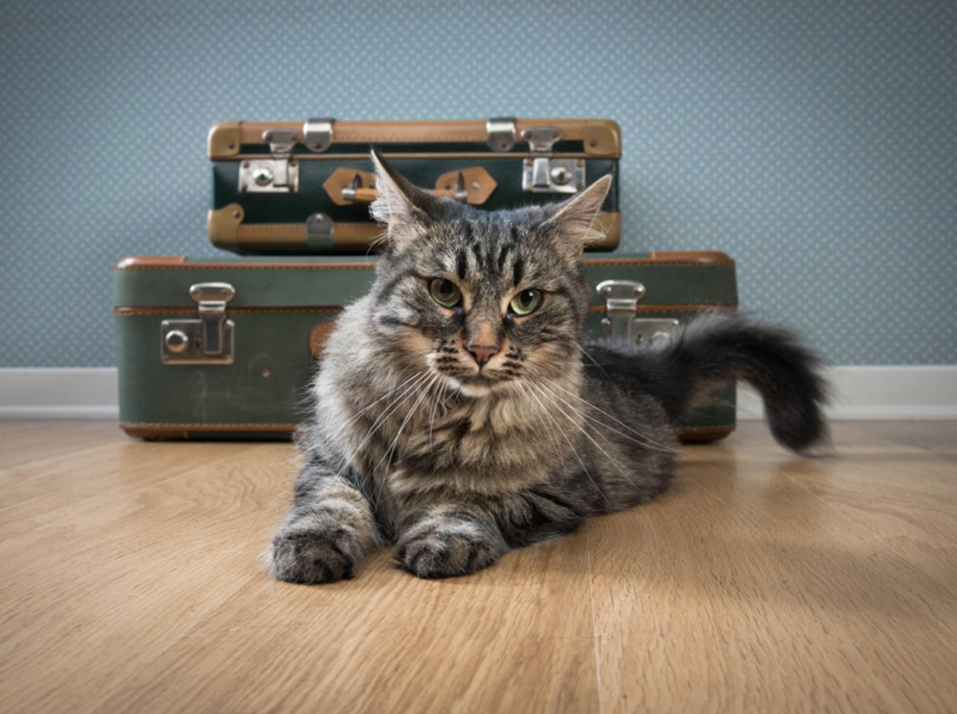 Die Koffer sind gepackt: Soll die Katze mit in den Urlaub? – Bild: Shutterstock / Stock Asso