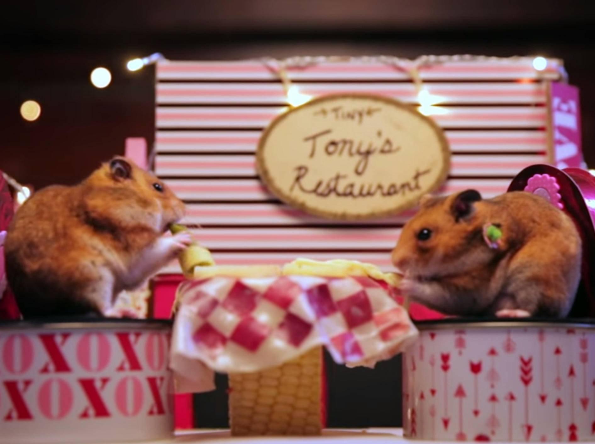 Hamster haben romantisches Date – Bild: YouTube / HelloDenizen