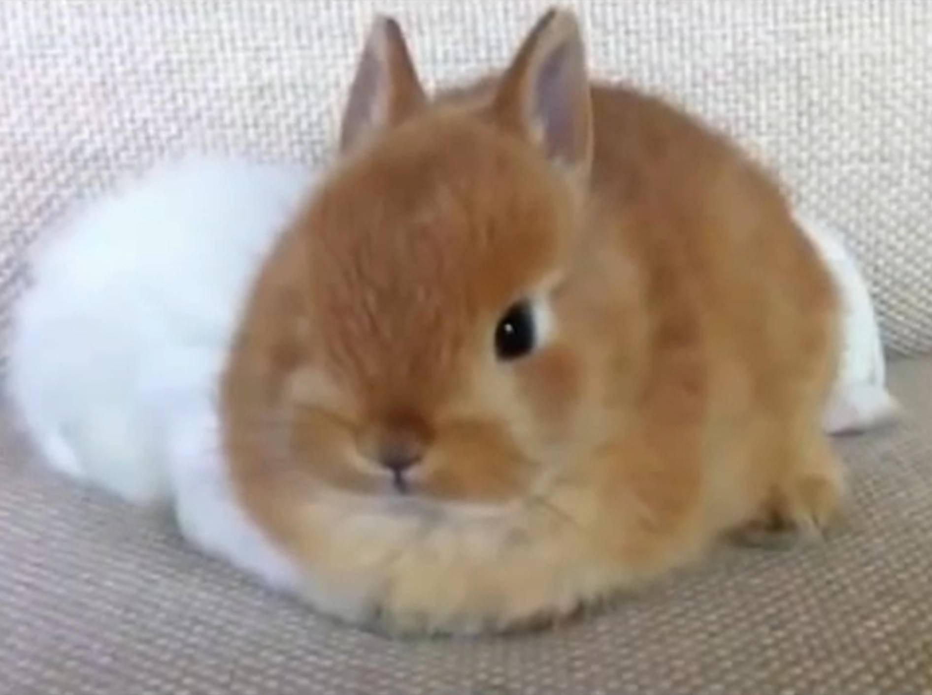 Süße Hasen-Compilation mit einer Überraschung – Bild: YouTube / FunnyCrash18+