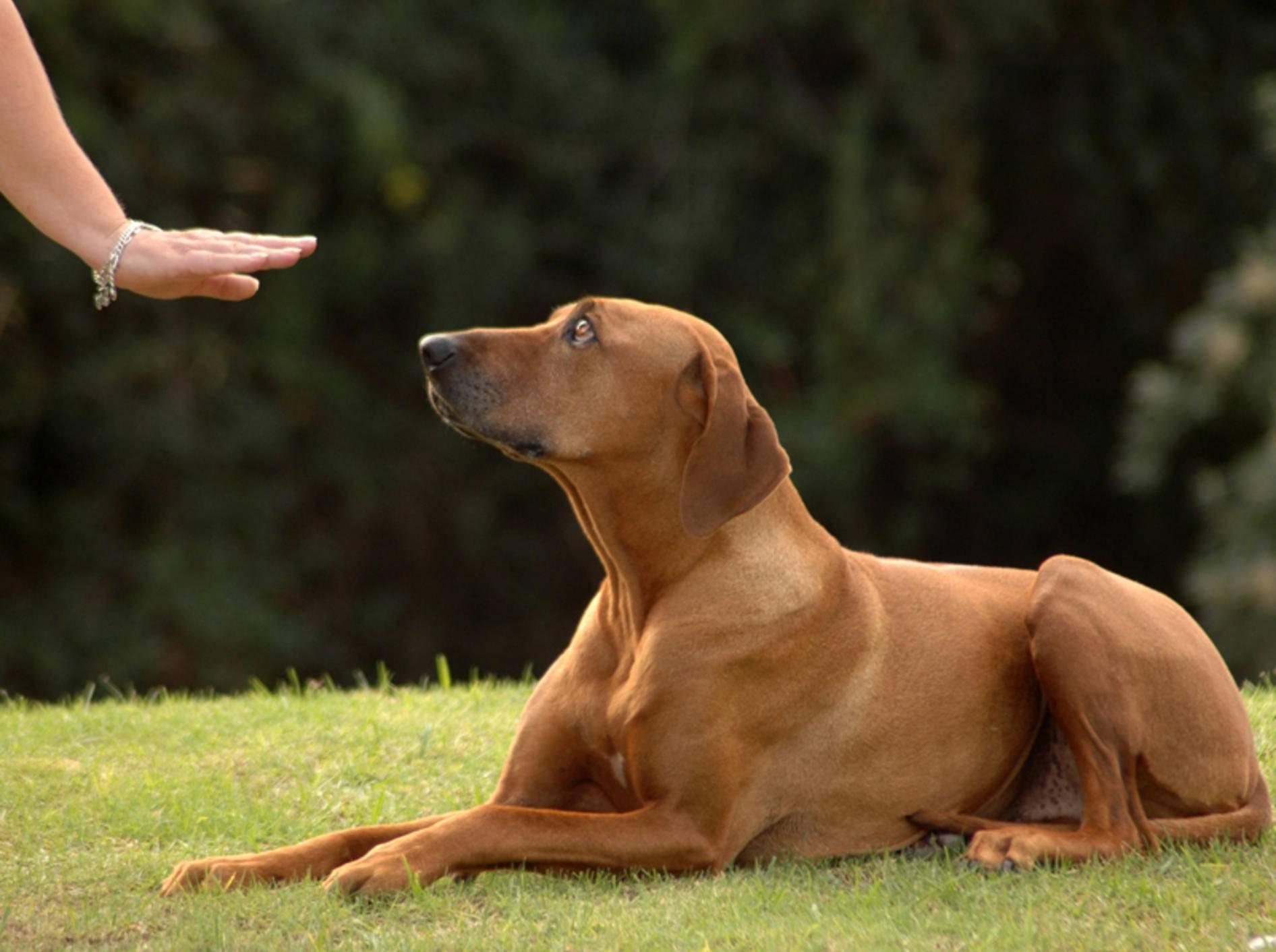 Dieser brave Hund versteht Frauchens Körpersprache – Bild: Shutterstock / Anke van Wyk