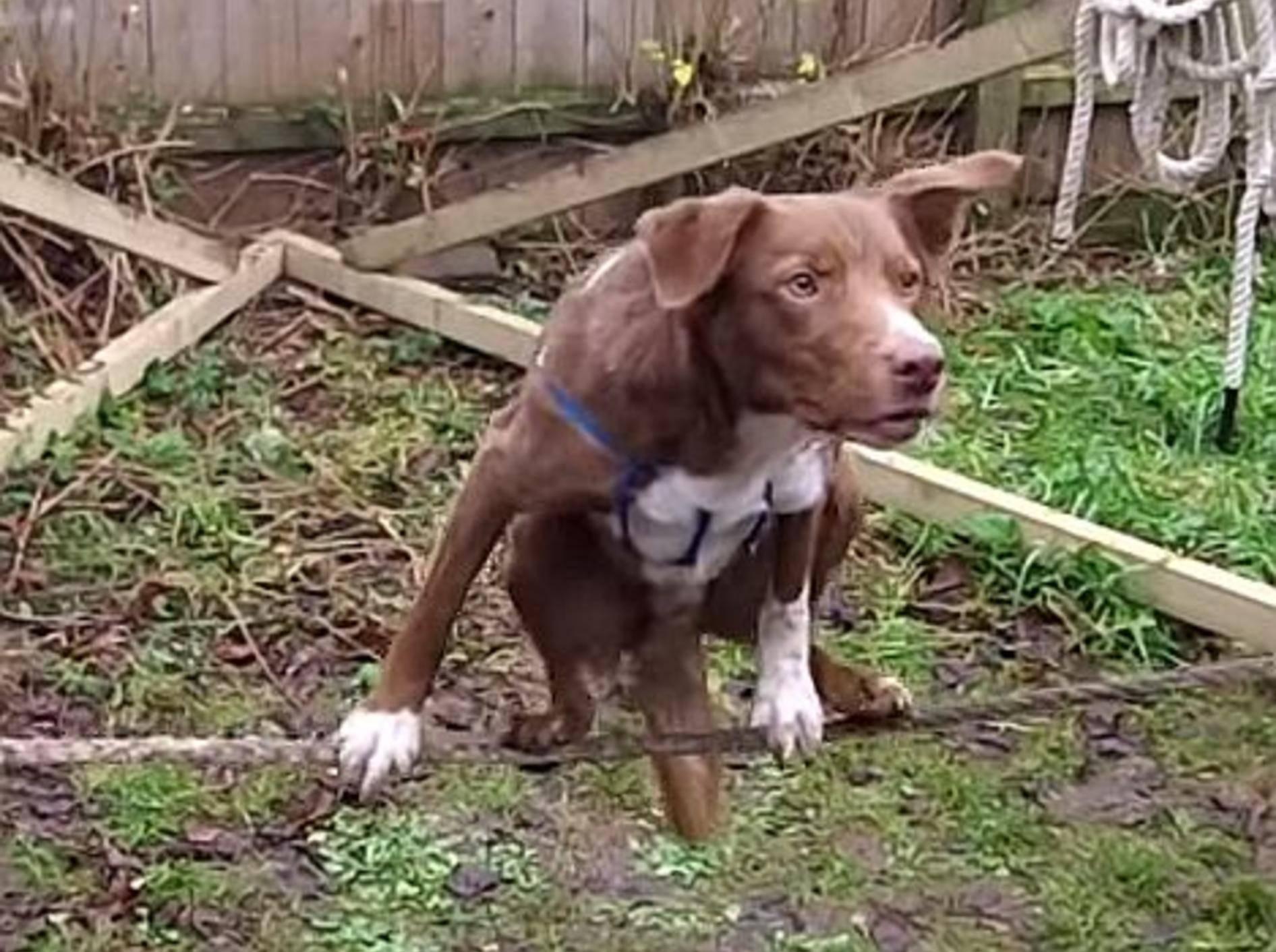 Akrobatischer Hund zeigt Seiltrick – Bild: Youtube / nicknozzy