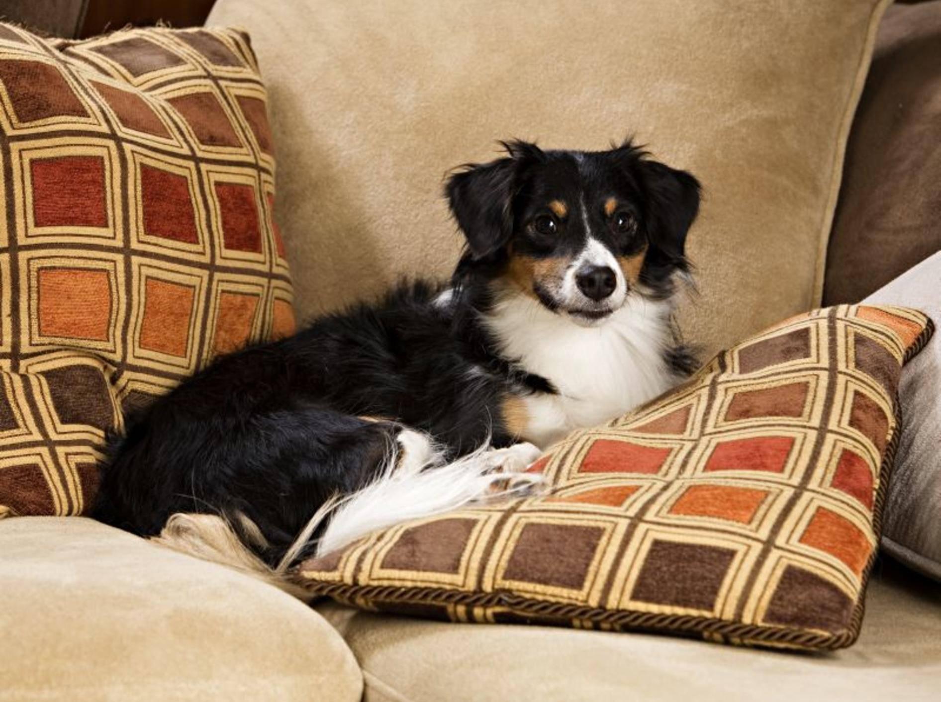 Nicht in jedem Haushalt erwünscht: Das Liegen auf der Couch – Bild: Shutterstock / Michelle D. Milliman