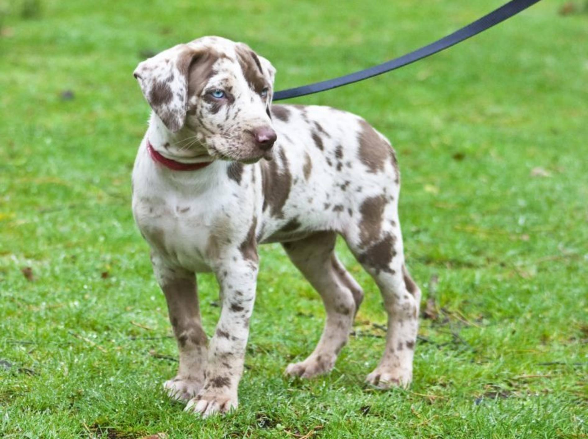 Schleppleinen für Spaziergänge und Hundetraining – Bild: Shutterstock / tiggra