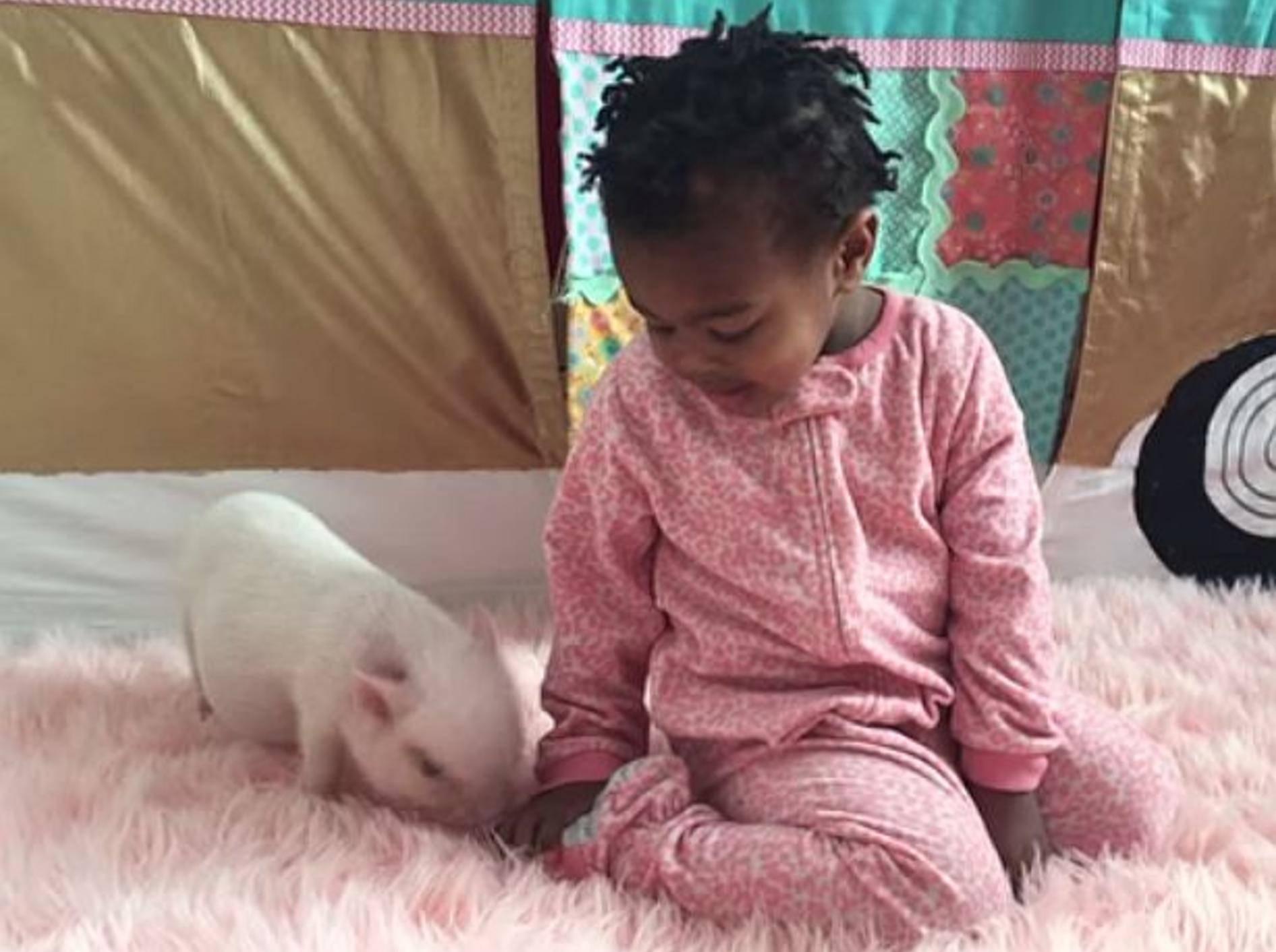 Supersüße Freunde: Kleinkind und Minischwein – Bild: Youtube / Live Sweet