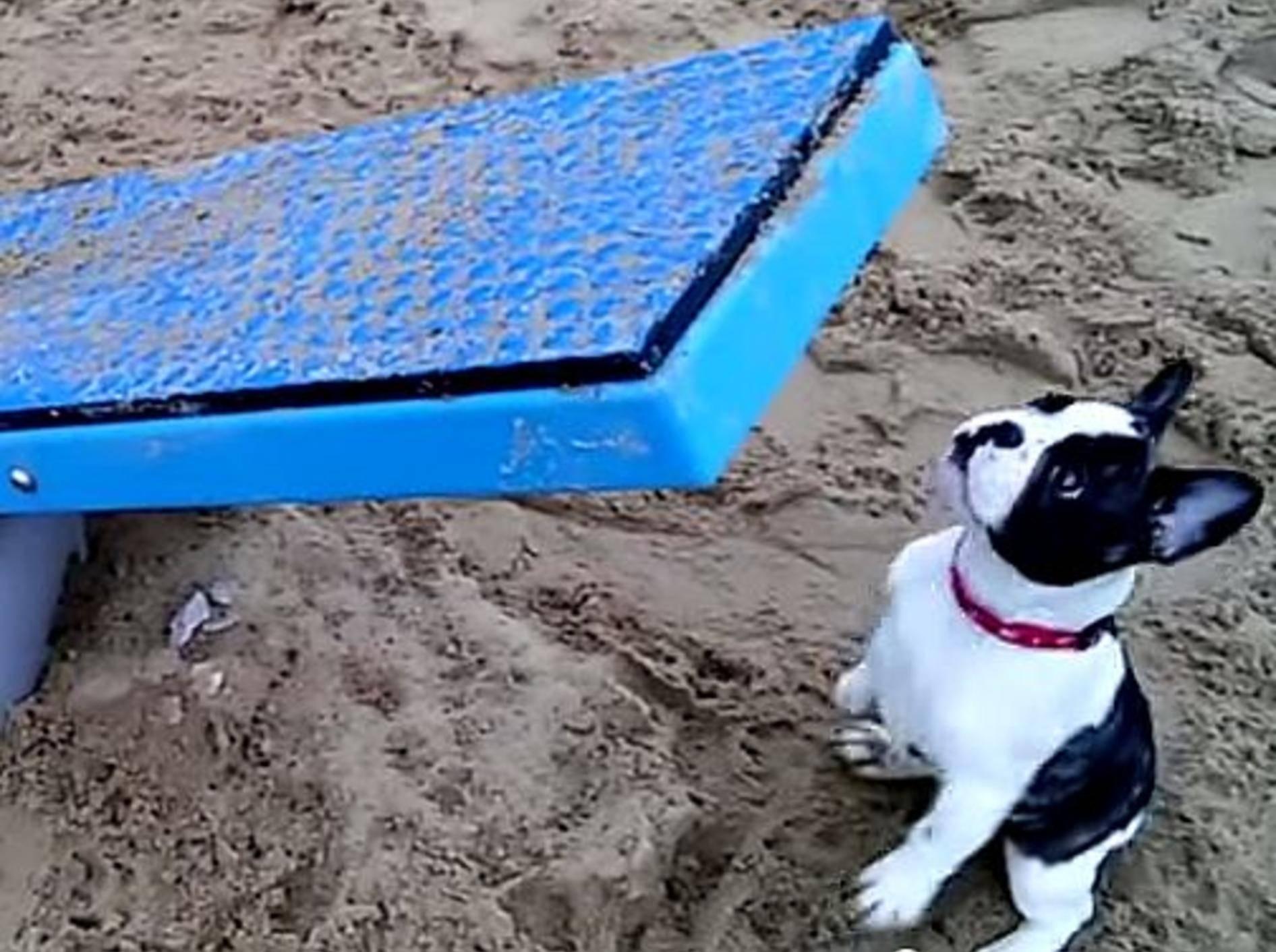 Welpe Pixel: Erster Besuch im Hundepark – Bild: Youtube / Pixel