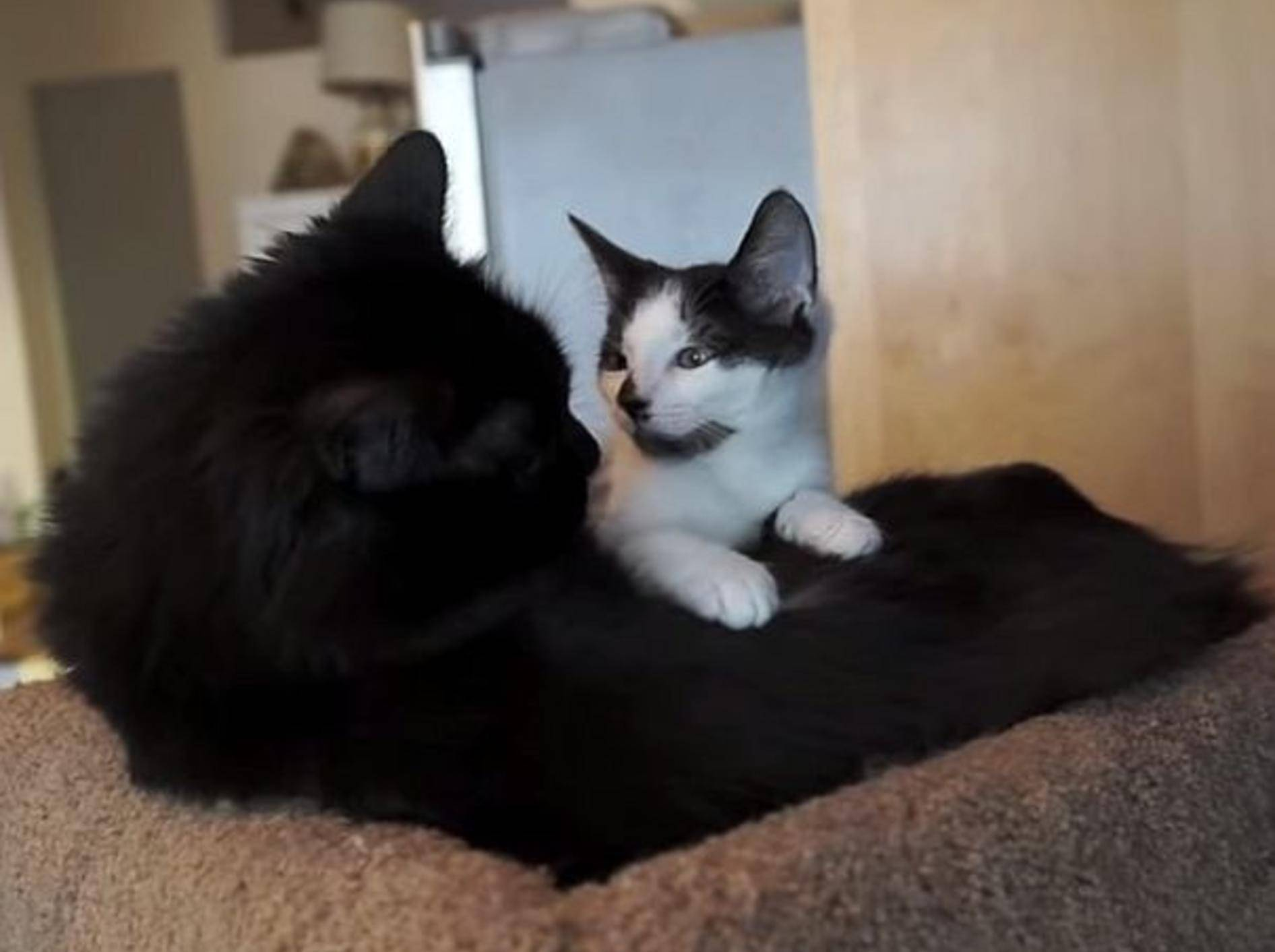 So süß: Zwei Katzen werden beste Freunde – Bild: Youtube / Sho Ko