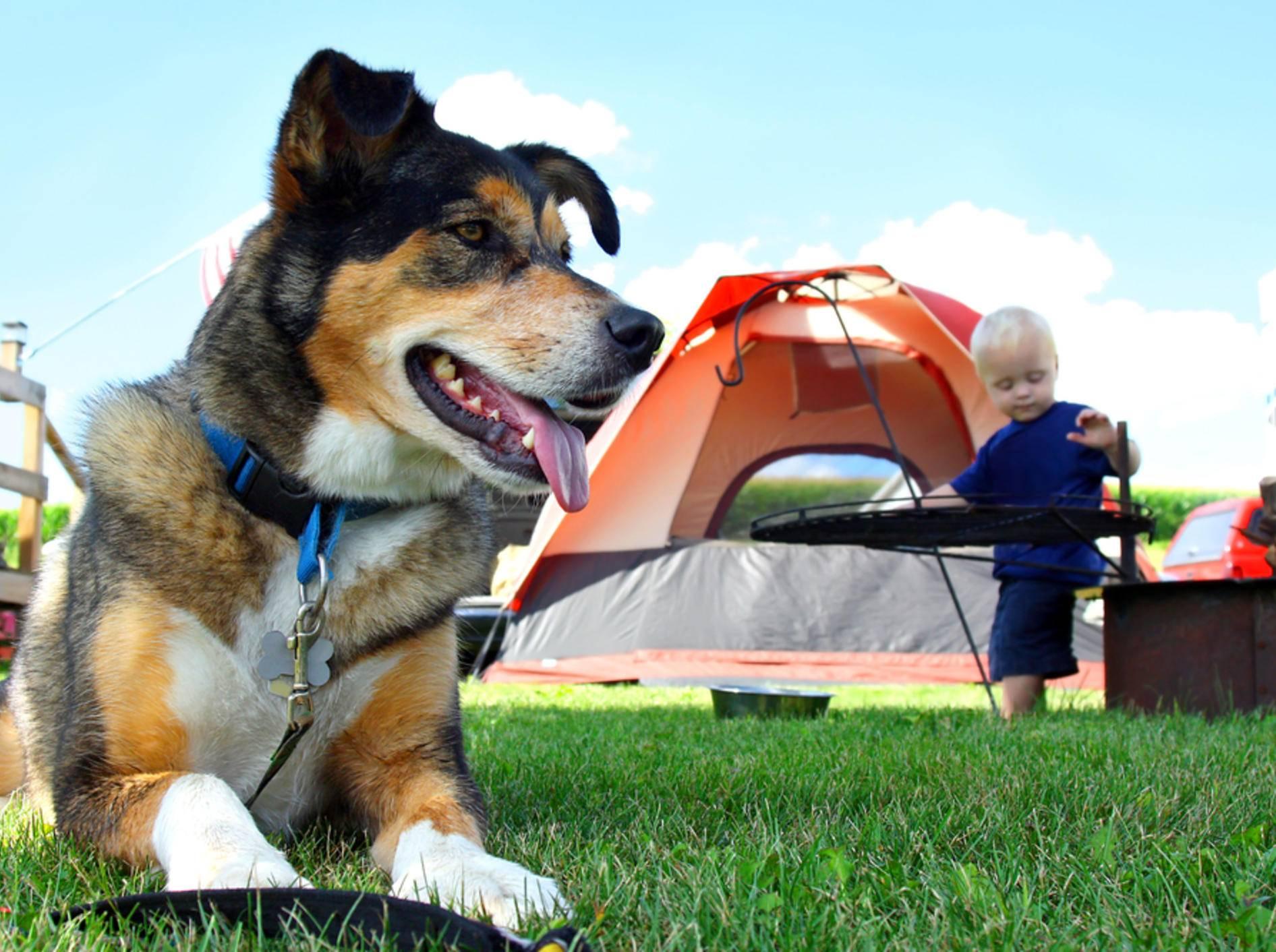 Campingurlaub mit dem Hund sorgt für Spaß an der frischen Luft – Bild: Shutterstock / Christin Lola