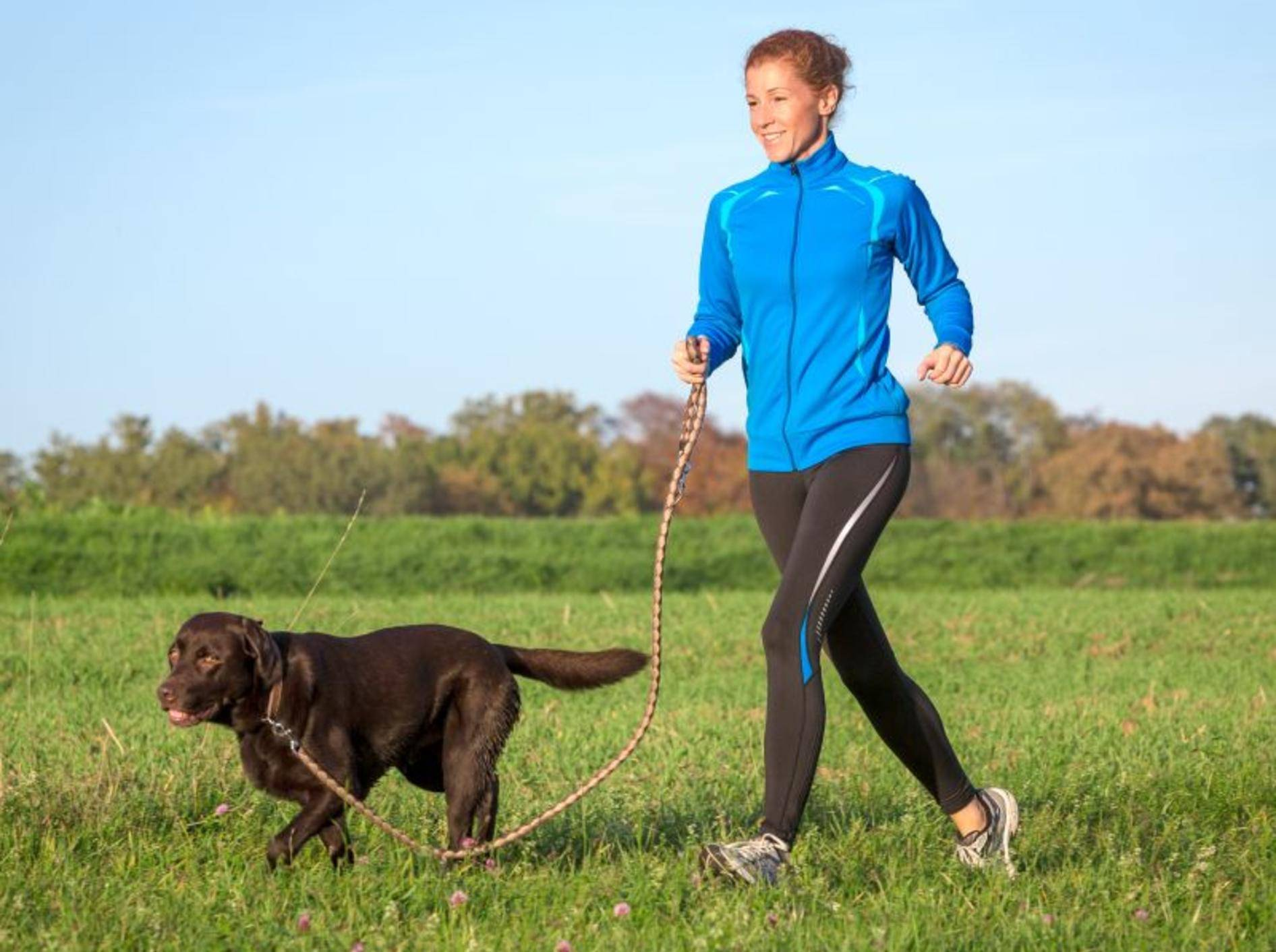 Wie viel Auslauf der Hund braucht hängt von der Rasse und anderen Faktoren ab – Bild: Shutterstock / msgrafixx