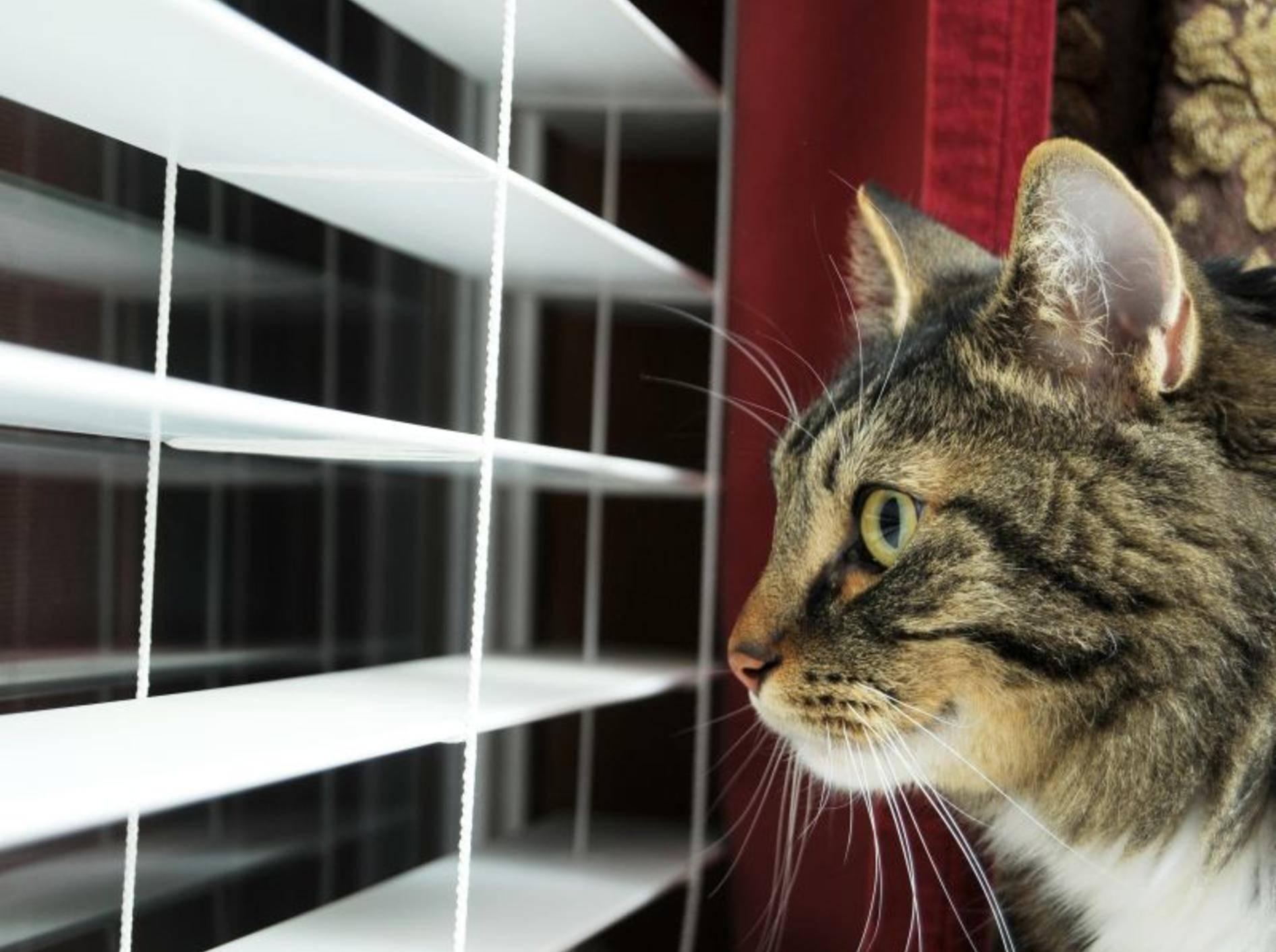 Einzelhaltung: Viele Katzen langweilen sich ohne Artgenossen – Bild: Shutterstock / Vlue