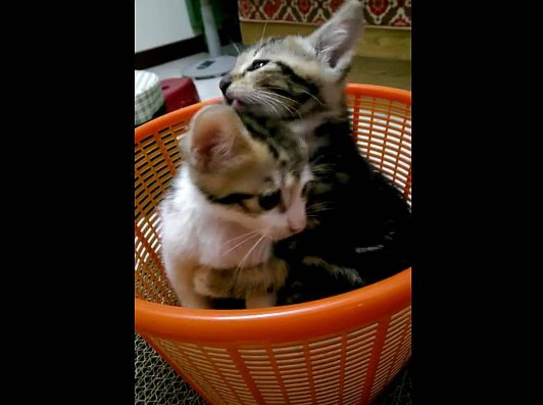 """Kleine Katze: """"Halt still, du musst jetzt baden!"""" – Bild: Youtube / Lun H"""