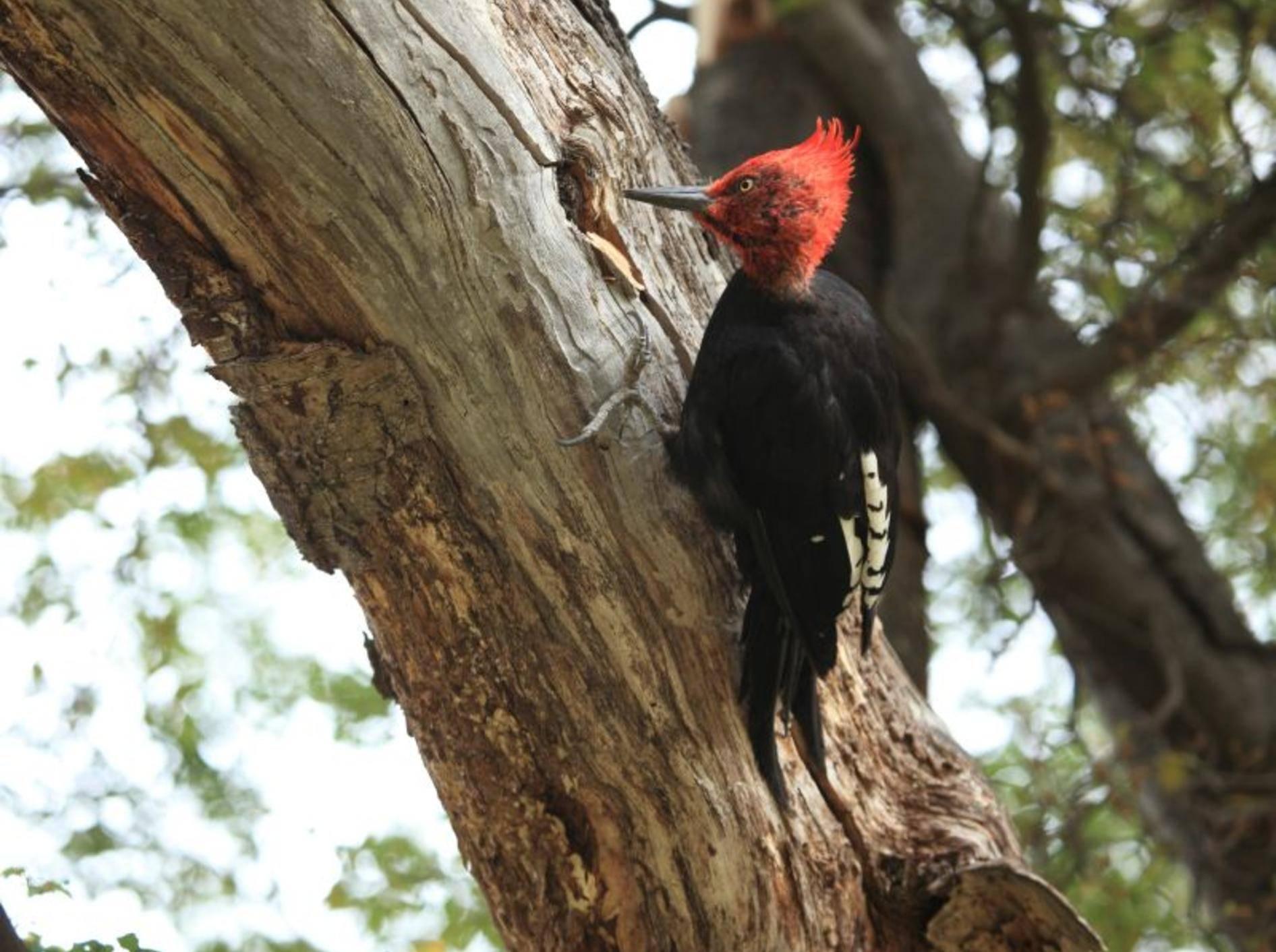 Wenn der Specht mit dem Schnabel gegen Holz klopft, hört man ihn schon von Weitem – Bild: Shutterstock / hecke61