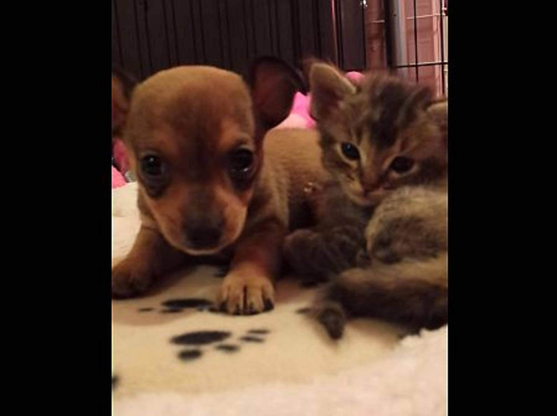 Zwei Kuschelfreunde zum Verlieben – Bild: Youtube / Chip & Adele