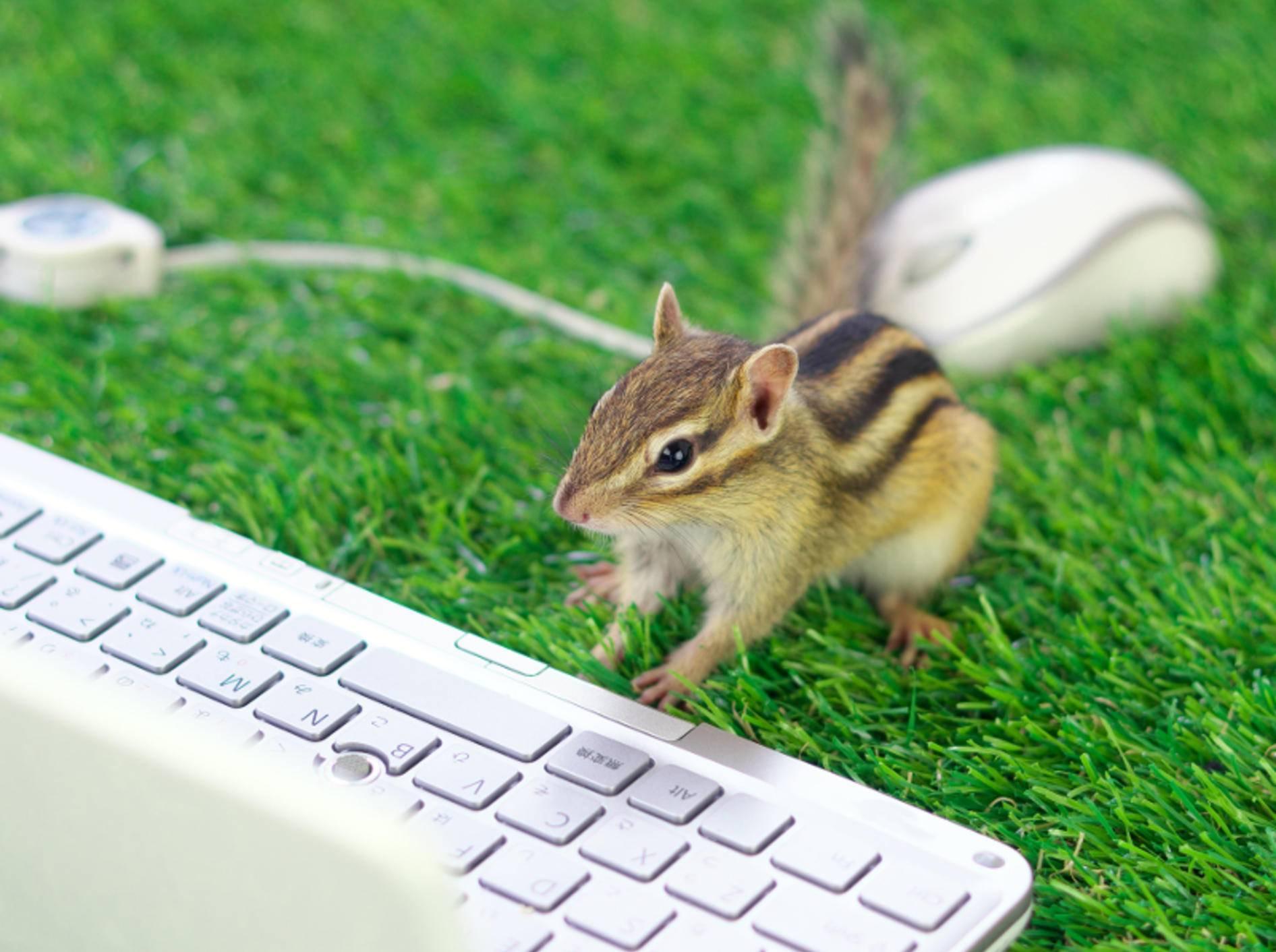 """""""Ach wie toll, jetzt kann ich Nüsse und andere Köstlichkeiten einfach im Internet bestellen!"""" – Bild: Shutterstock / stock_shot"""