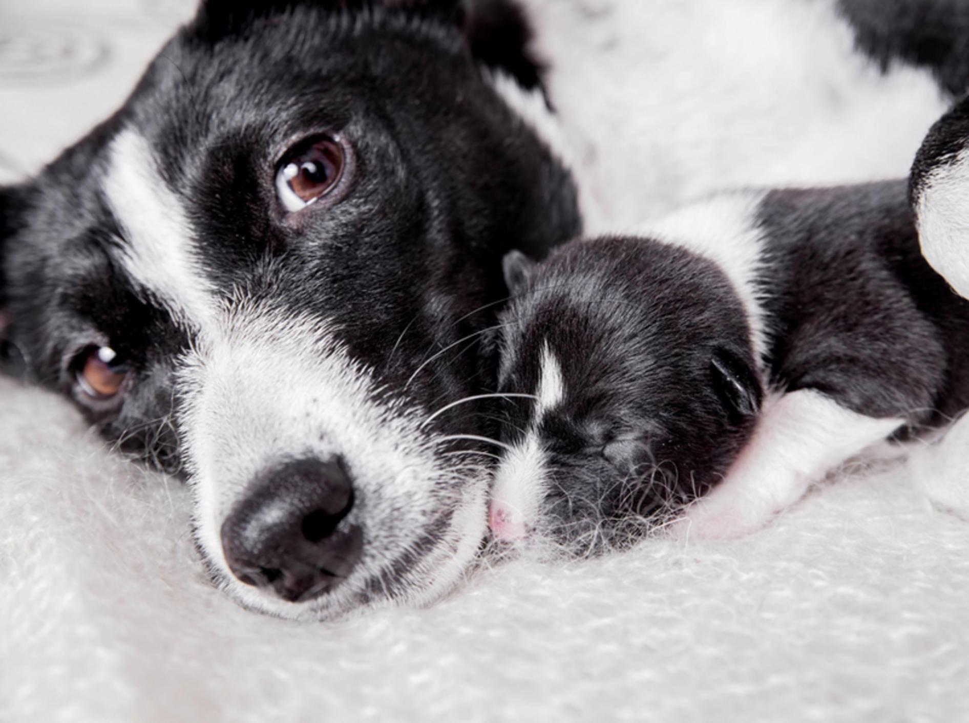 Hündin kuschelt mit neu geborenem Welpen