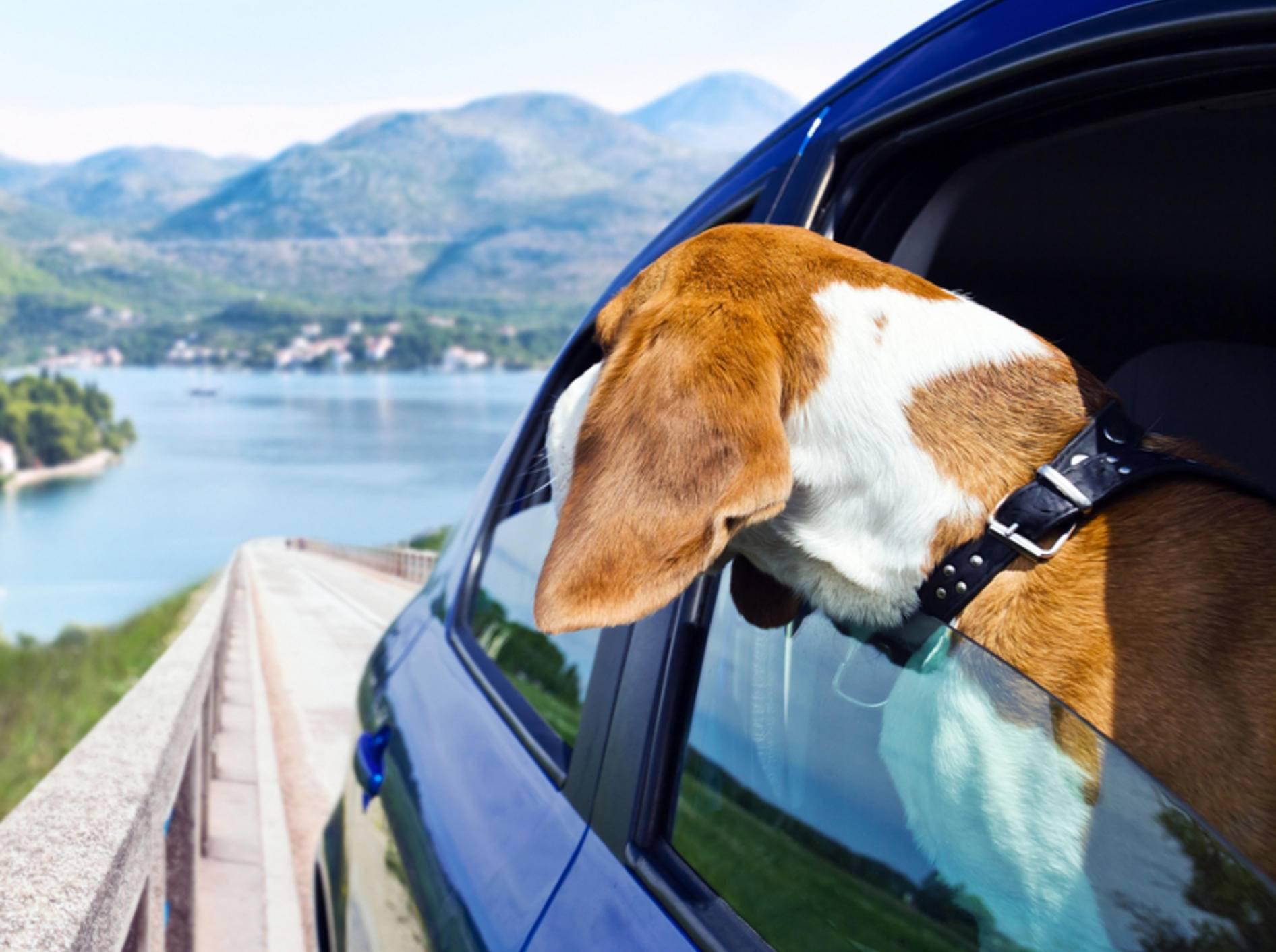 Nur Hunde mit einem Mikrochip dürfen ins europäische Ausland reisen – Bild: Shutterstock / Igor Normann