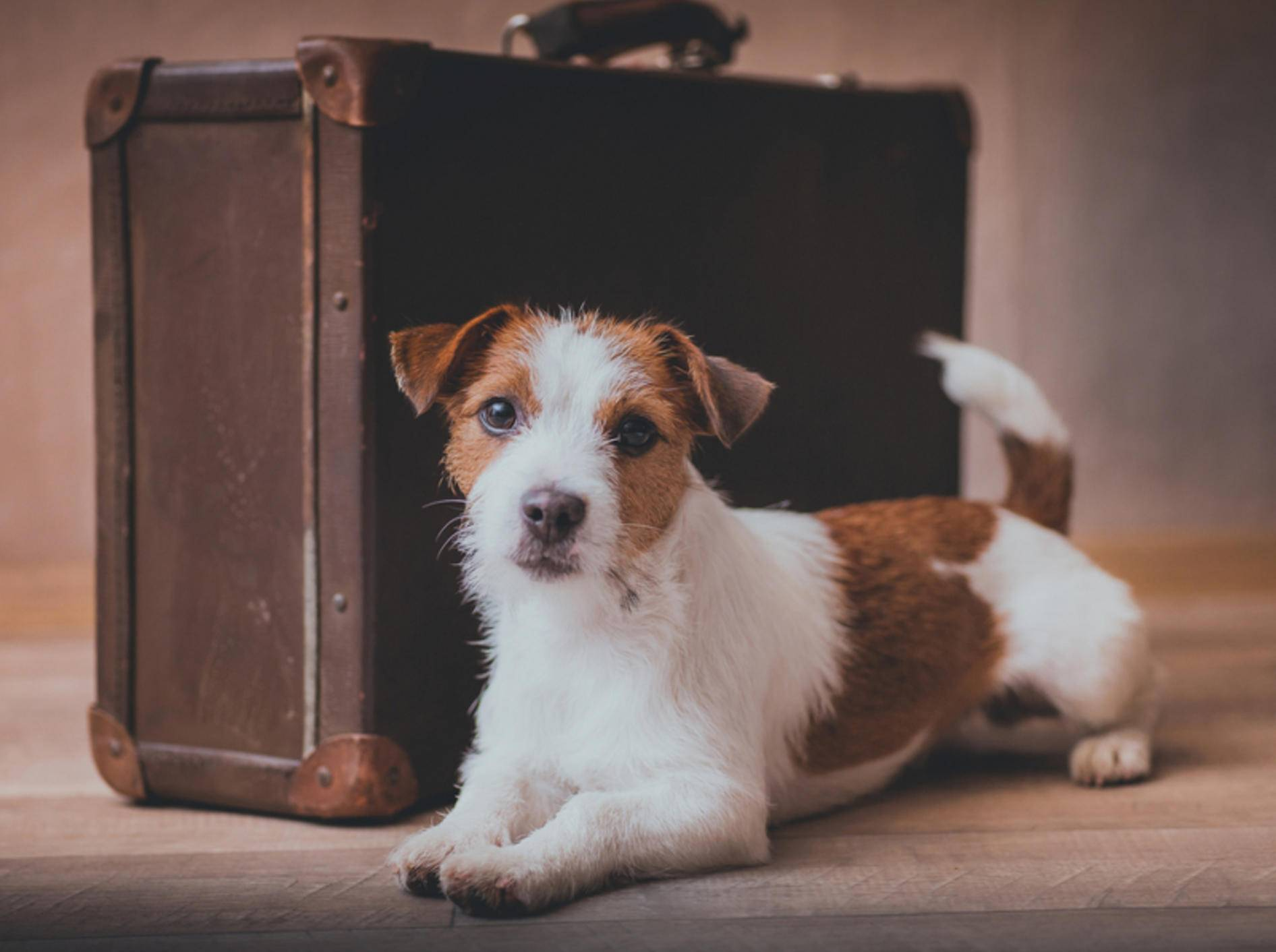 Mit einer Reiseapotheke für Ihren Hund kann der Urlaub losgehen – Bild: Shutterstock / dezi