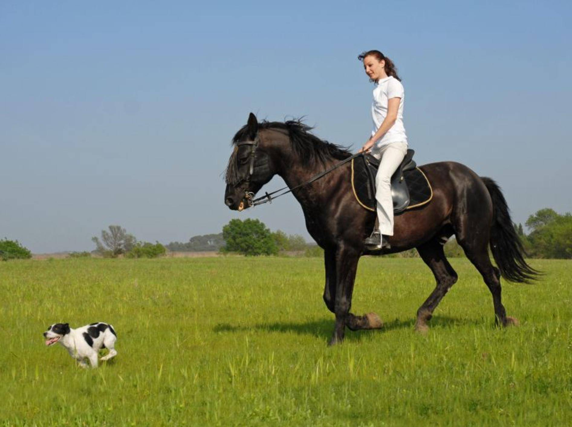 Wenn Hund und Pferd gut vorbereitet sind, macht der Ausritt Spaß – Bild: Shutterstock / cynoclub