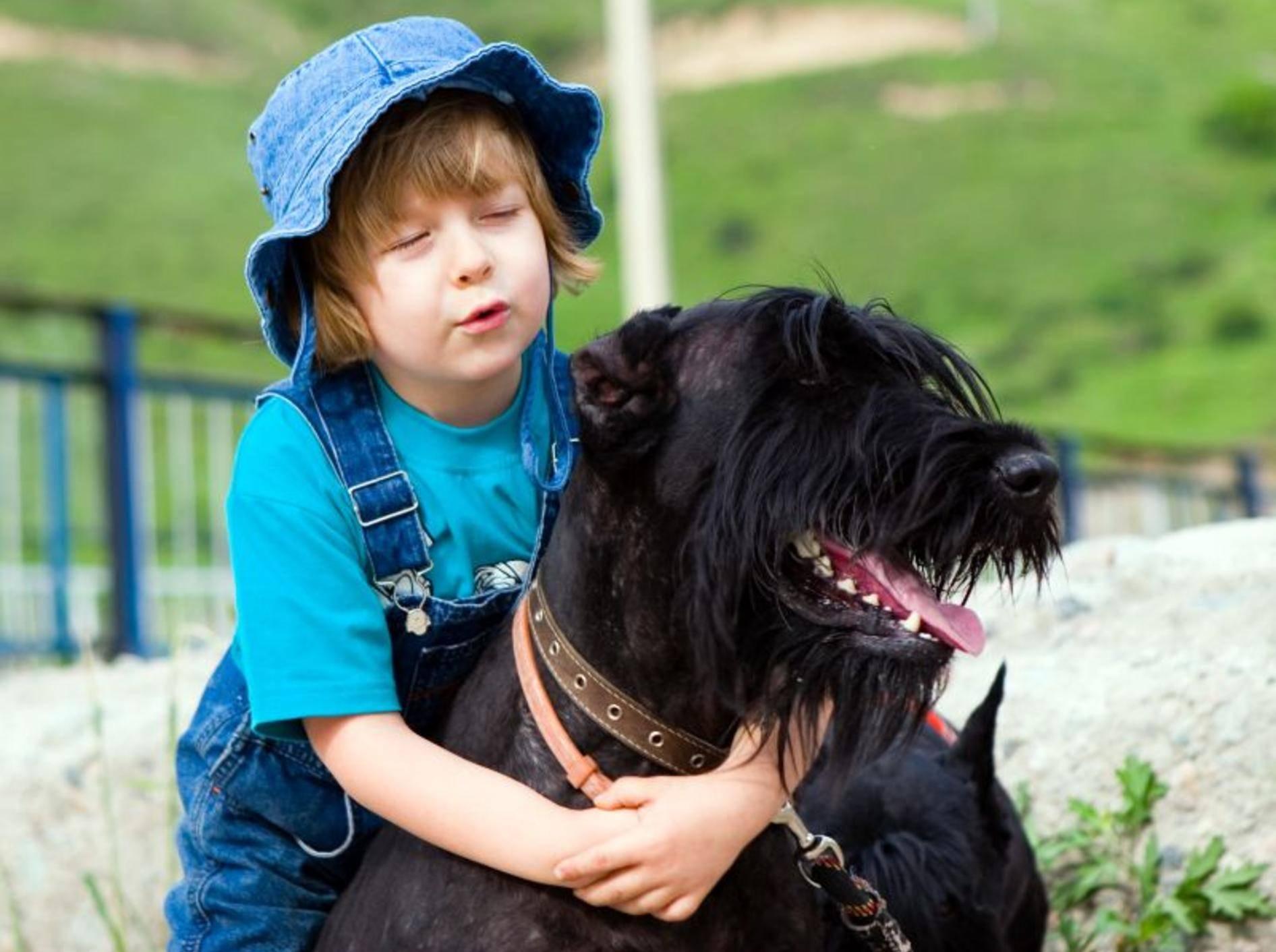 Eine gute Erziehung macht den Riesenschnauzer zum Verlasshund – Bild: Shutterstock / Danila