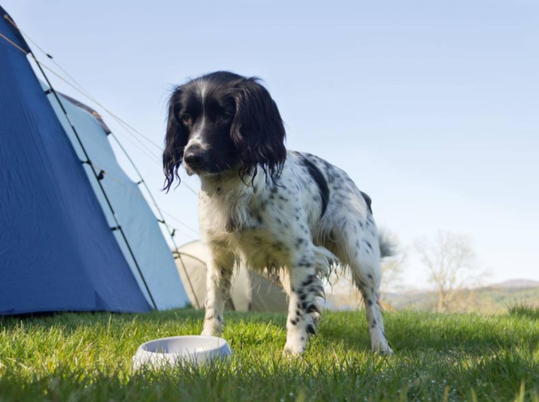 Neben Futter- und Trinknapf gehört auch das Lieblingsfutter des Hundes ins Reisegepäck – Bild: Shutterstock / GroomesPhotography