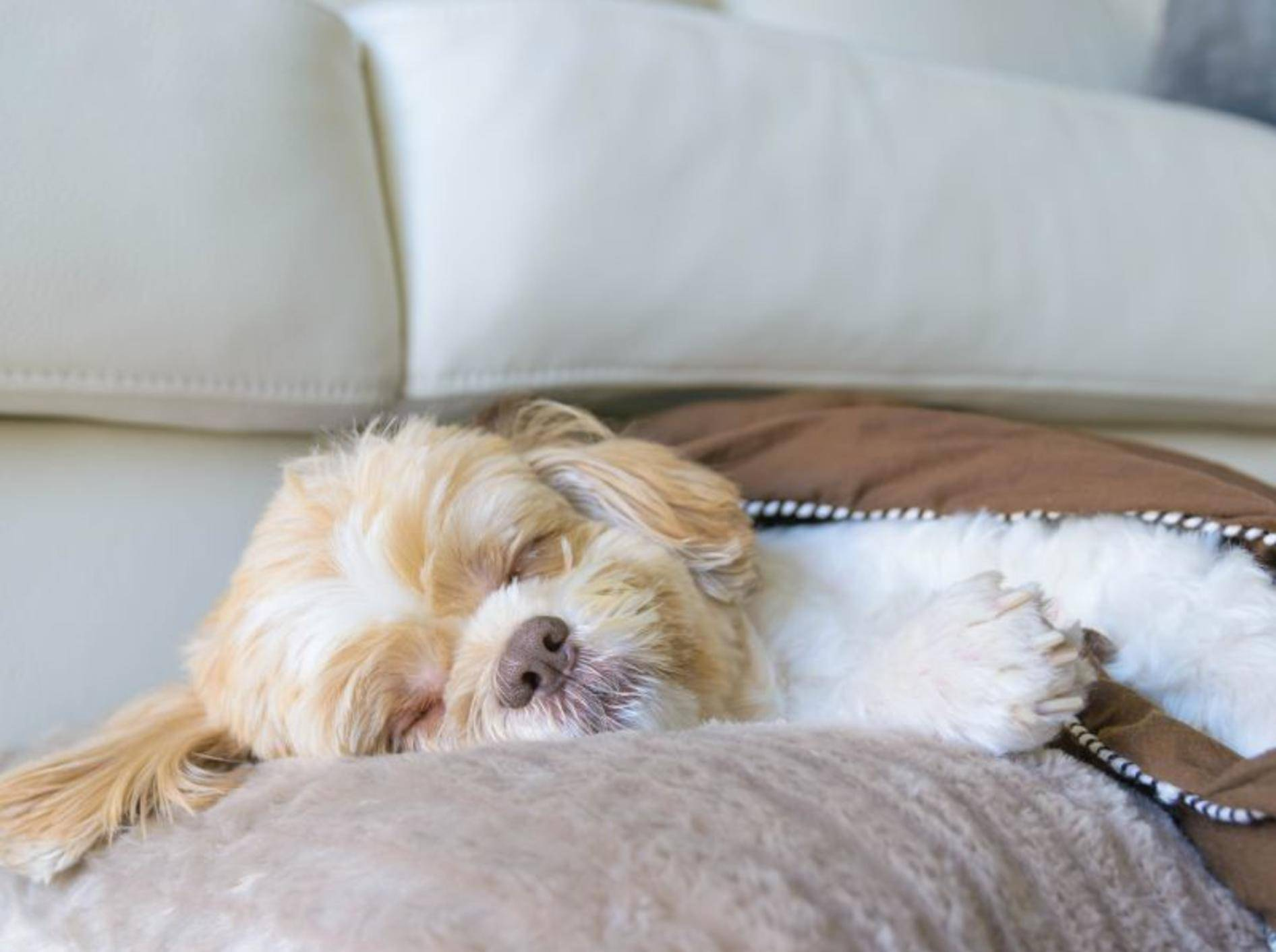Hundekorb im Zimmer: Im Hunde-Hotel selbstverständlich – Bild: Shutterstock / Joy_enjoy