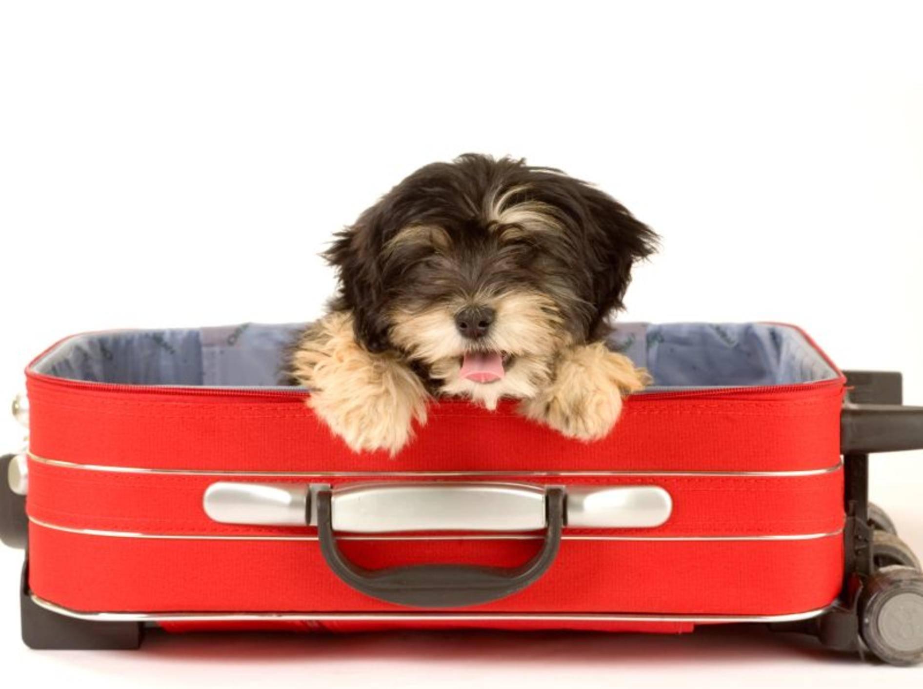 Sind Hunde im Hotel Ihrer Wahl willkommen? – Bild: Shutterstock / Ferenc Szelepcsenyi