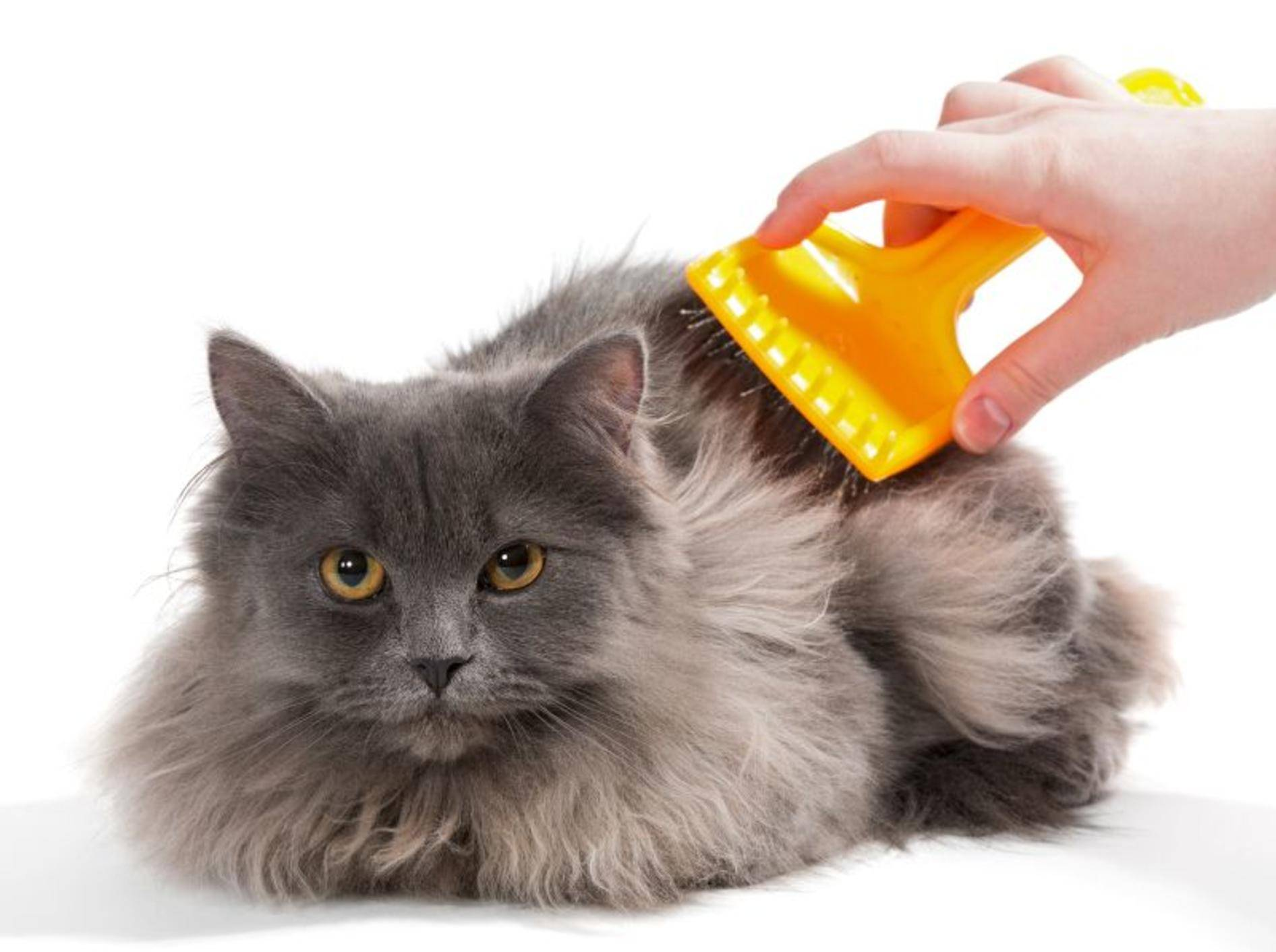 Viel Pflege mit der Bürste beugt Verfilzungen im Katzenfell vor – Bild: Shutterstock / Okssi