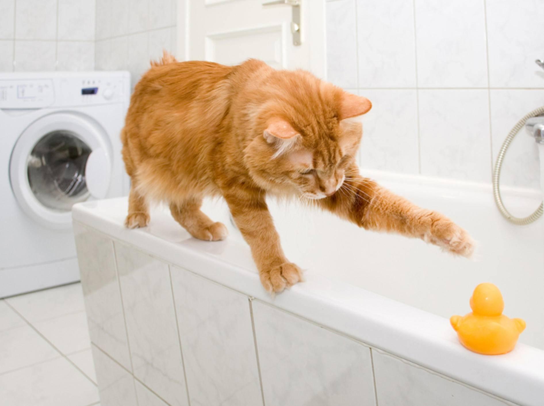 Bad und Küche sollten katzensicher sein, bevor sich der Stubentiger dort austobt – Bild: Shutterstock / Asasirov