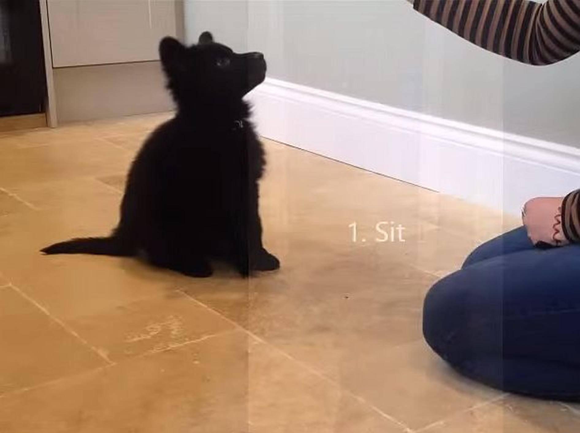 Babyschäferhund zeigt Tricks – Bild: Youtube / Alice Brownridge