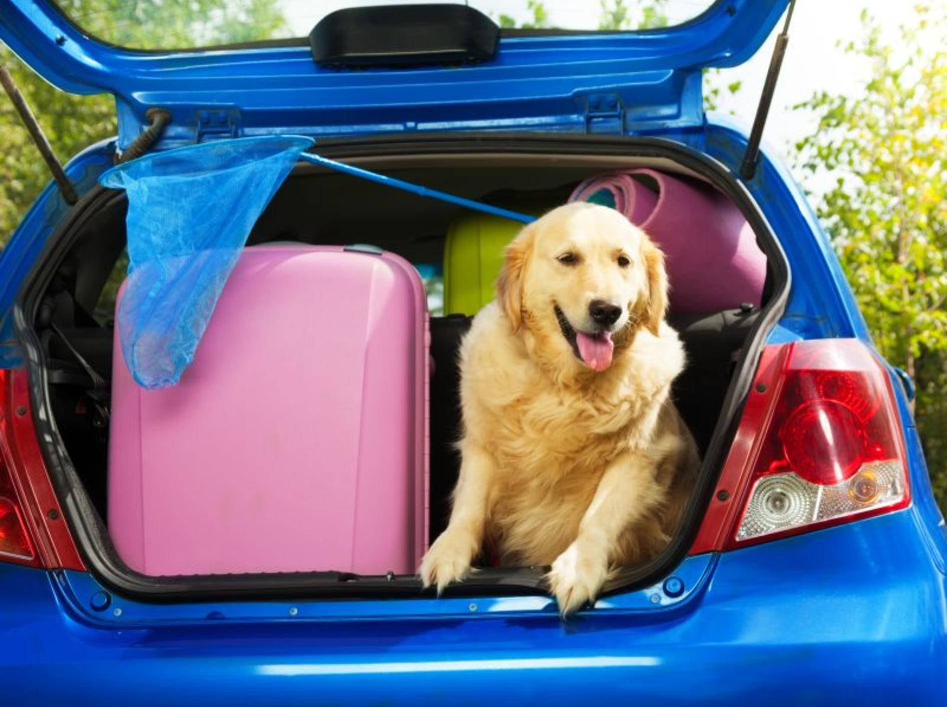 Urlaub mit Hund: Ist alles eingepackt? Dann kann es ja losgehen! – Bild: Shutterstock / Sergey Novikov