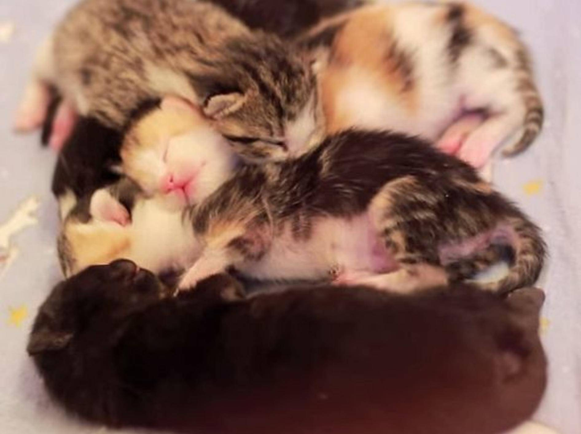 Katzenpflegestation zeigt süße Neuzugänge – Bild: Youtube / CARE - Cat Adoption & Rescue Efforts, Inc