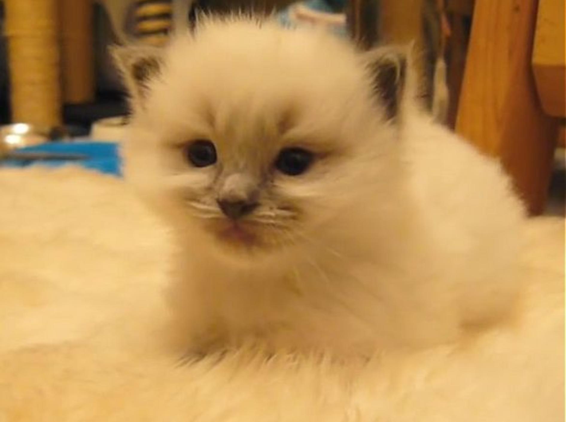 Gute Nacht, flauschiges Katzenbaby! – Bild: Youtube / Chris Fifield-Smith