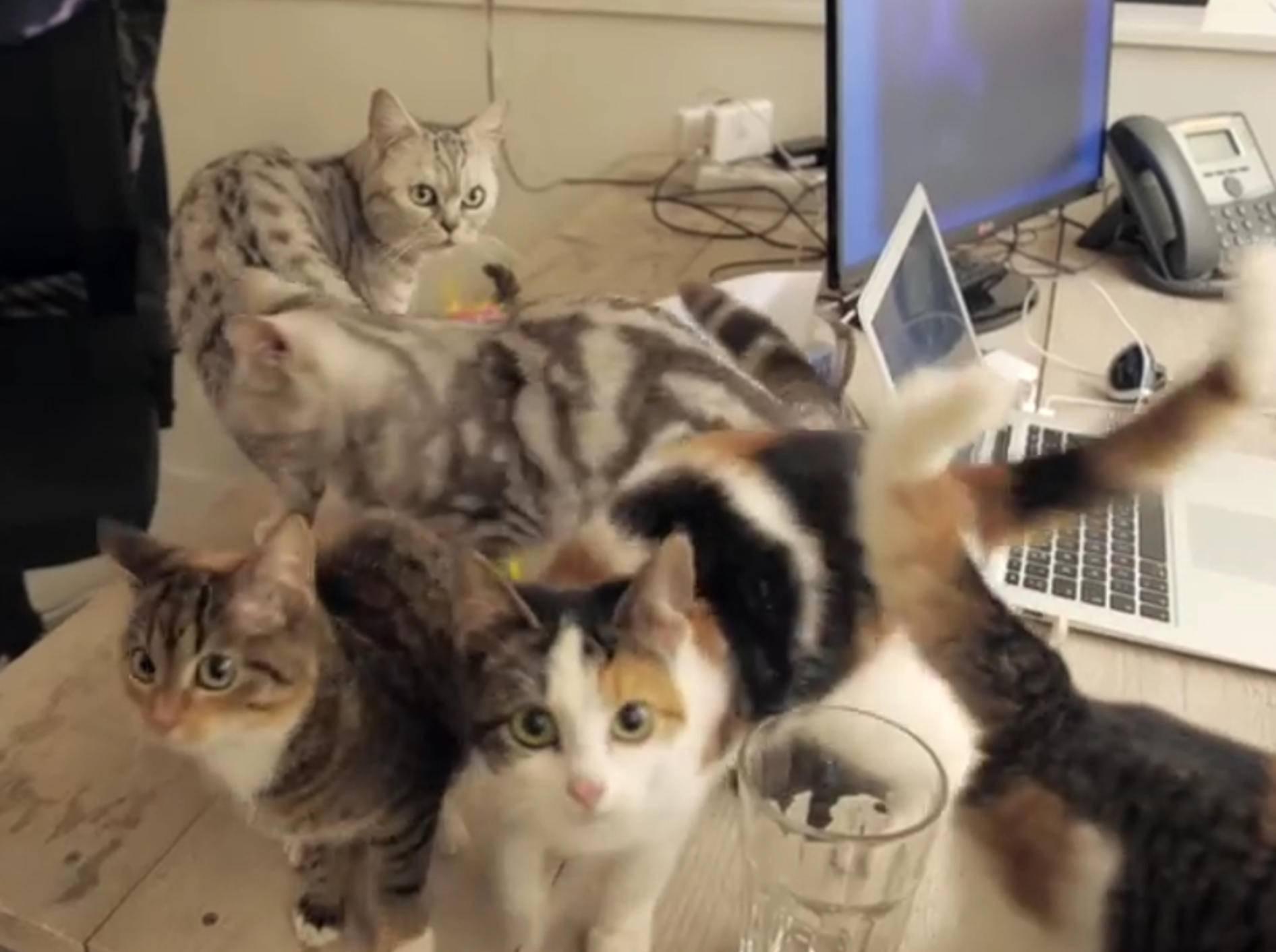 """Freche Katzen: """"Wir haben im Büro das Sagen!"""" – Bild: YouTube / Poopy Cat"""