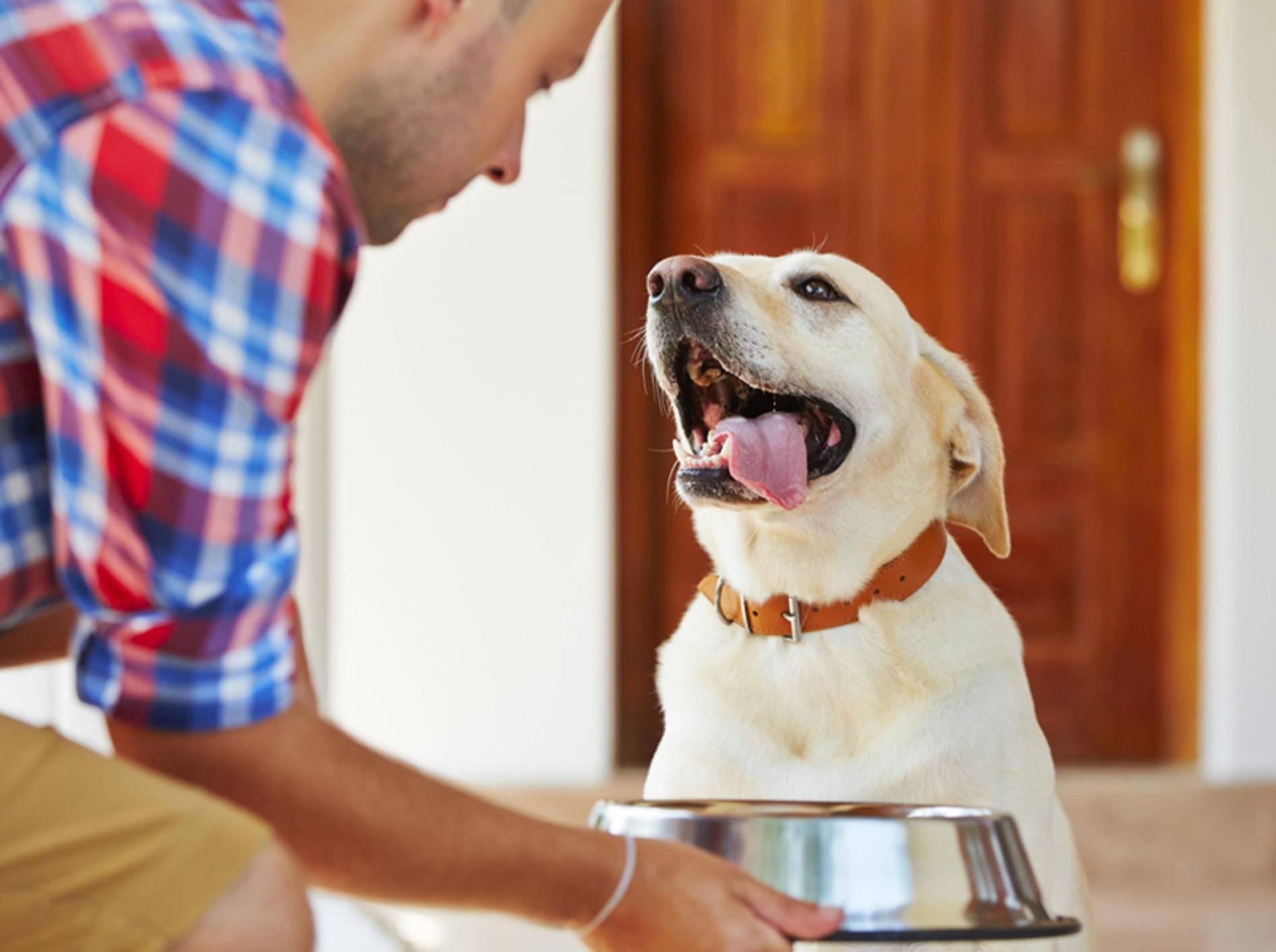 Wenn Sie Hundefutter richtig lagern, haben Futtermilben keine Chance – Shutterstock / Jaromir Chalabala