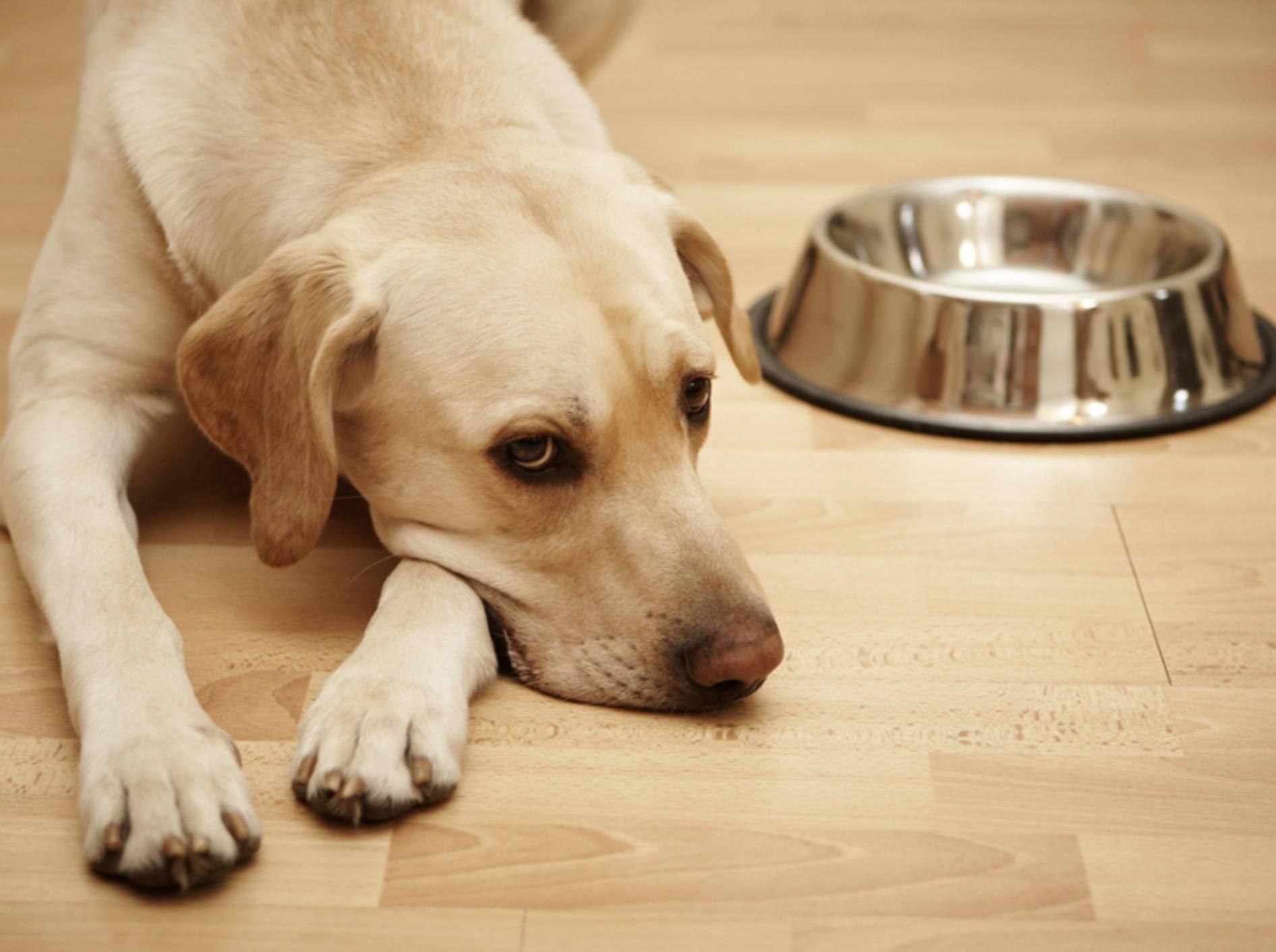 Gewisse Inhaltsstoffe von Hundefutter können Allergien auslösen – Shutterstock / Jaromir Chalabala