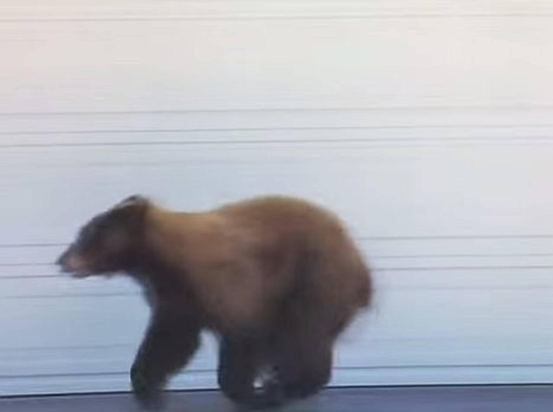 Babybär trifft Mensch: Was passiert? – Bild: Youtube / iksnyrk