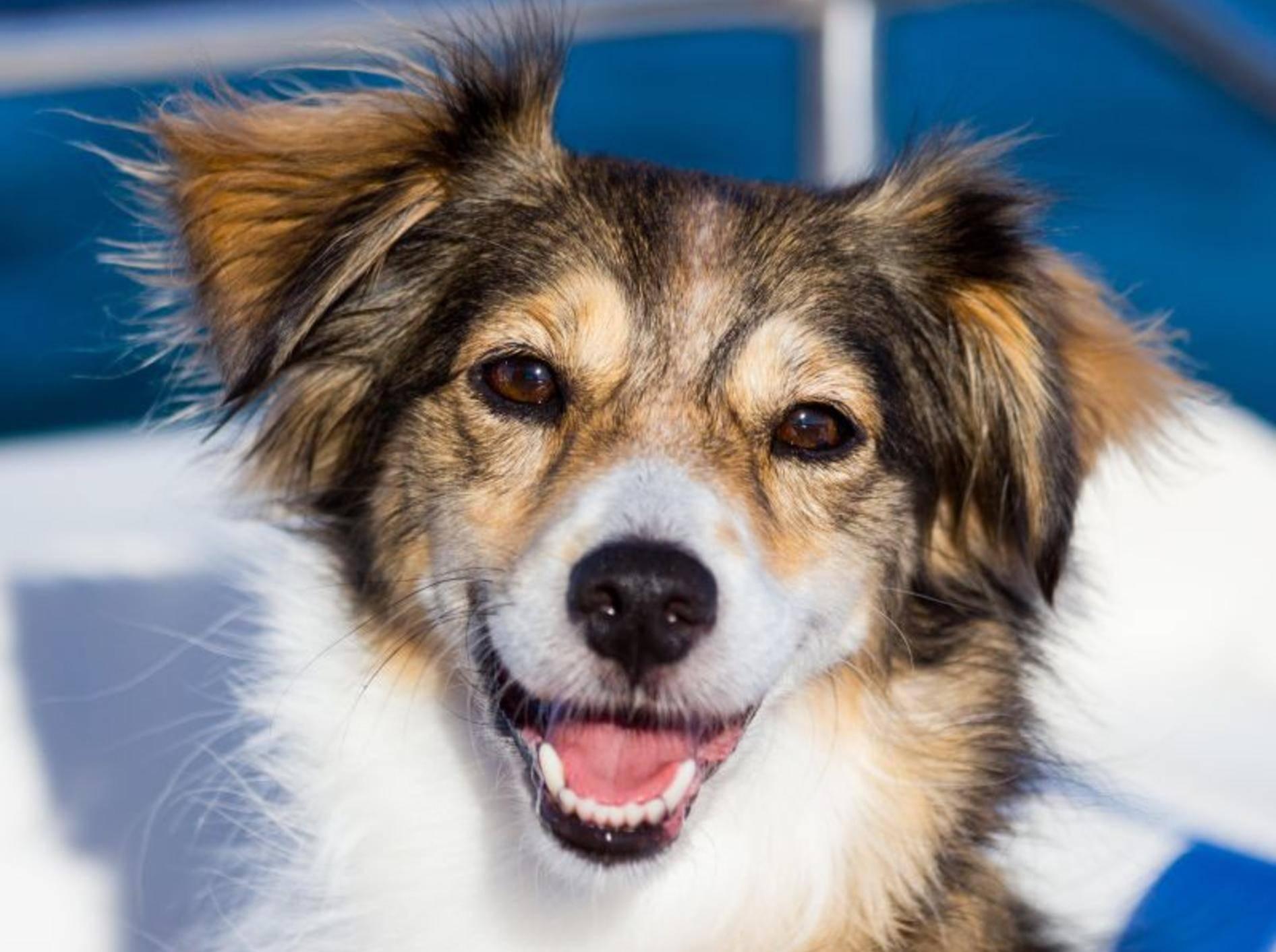 Schifffahren mit dem Hund: Bei guter Vorbereitung meist kein Problem – Bild: Shutterstock / eSeven