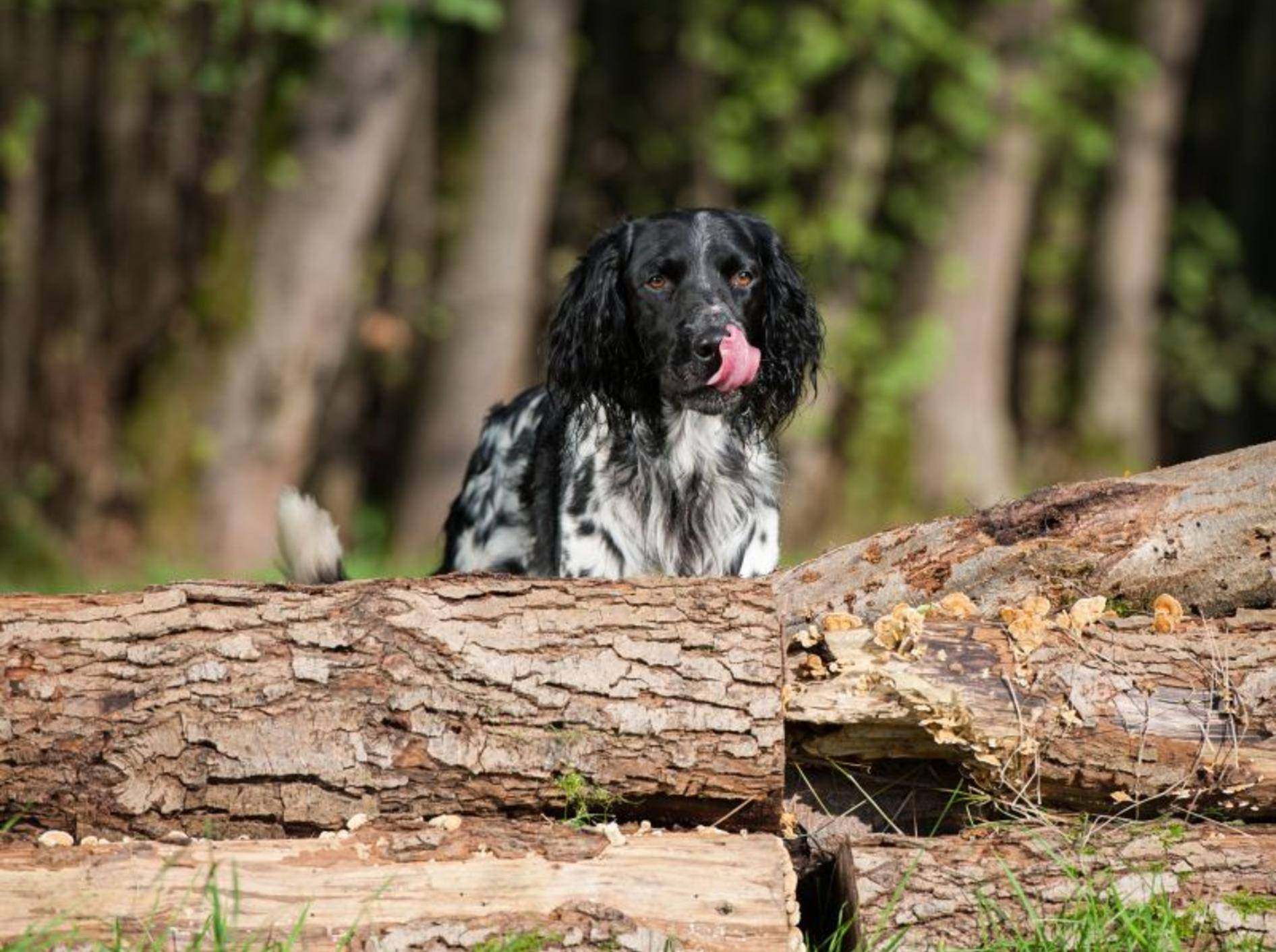 Wenn ein Hund wildert ist Training angesagt – Bild: Shutterstock / Dora Zett